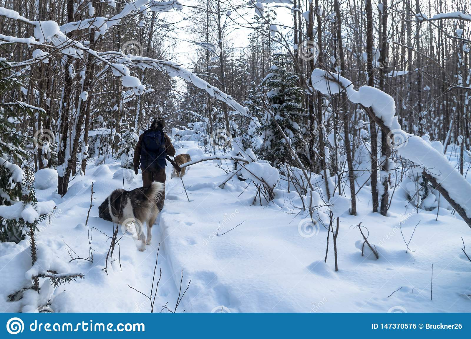 Человек идет поохотиться в зиме