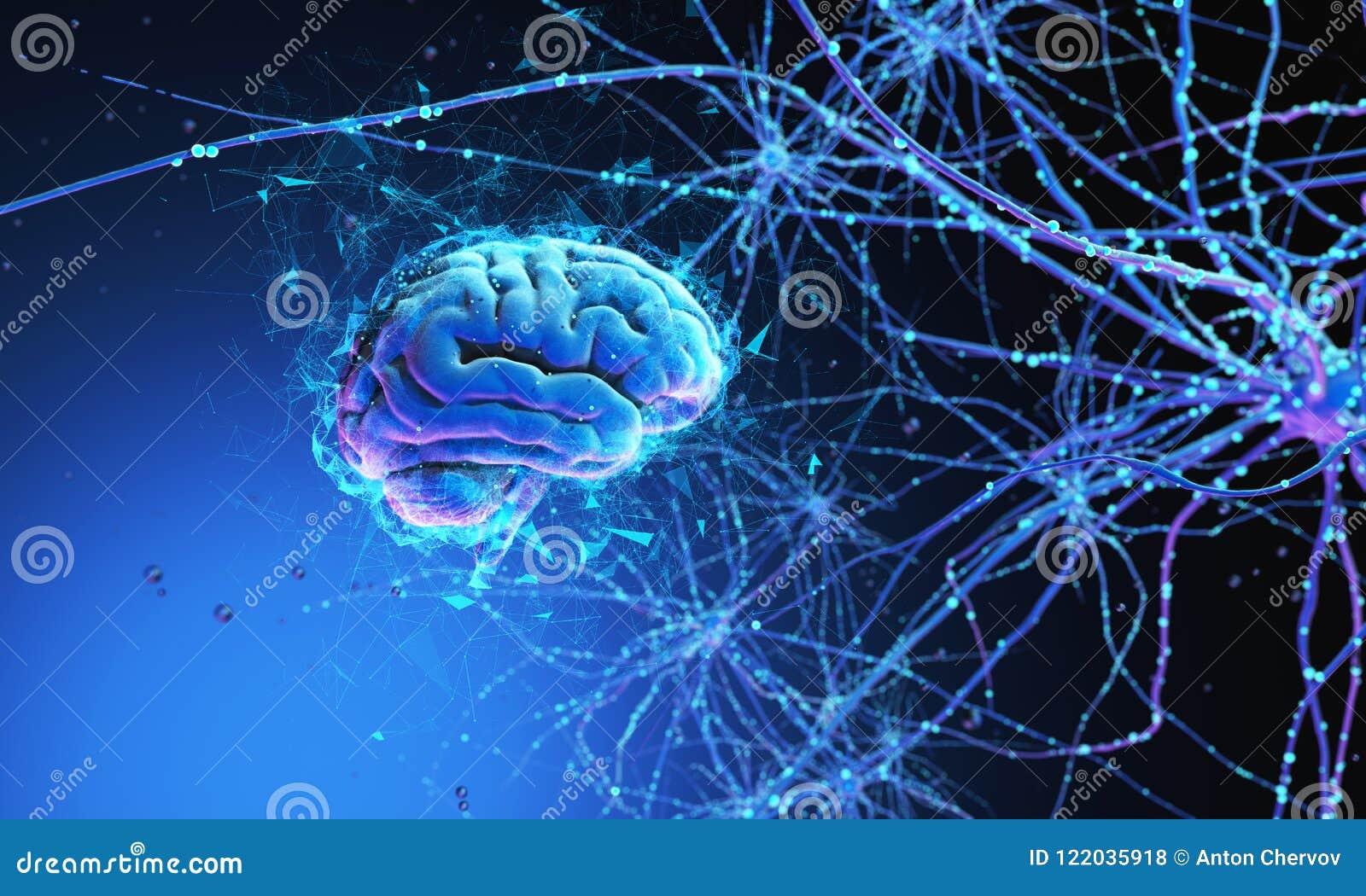 человек мозга 3d