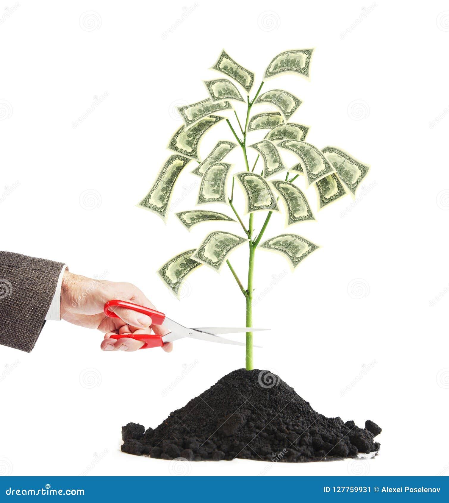 Человек режет малое дерево на котором вырастите доллары с ножницами