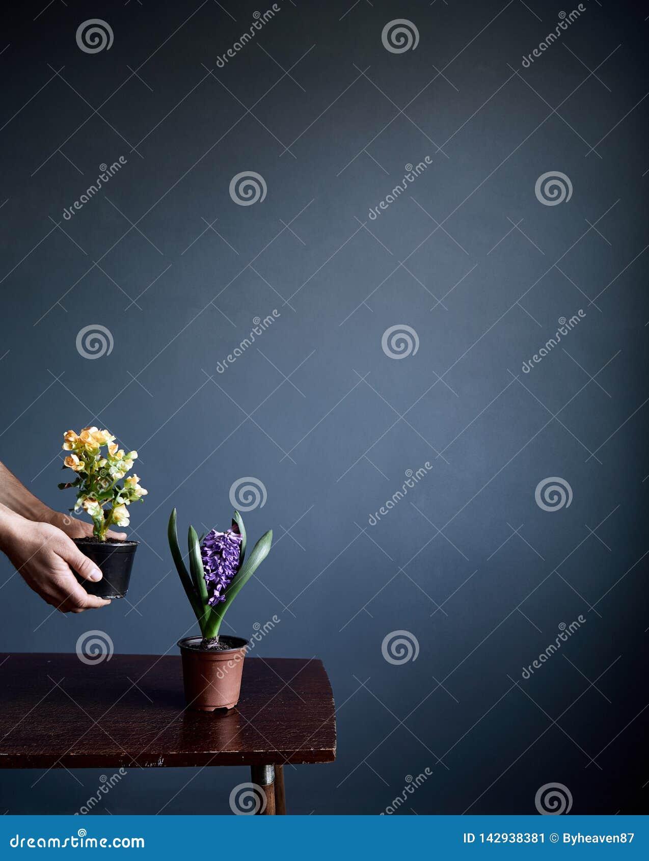 Человек с в горшке цветками на серой предпосылке стены