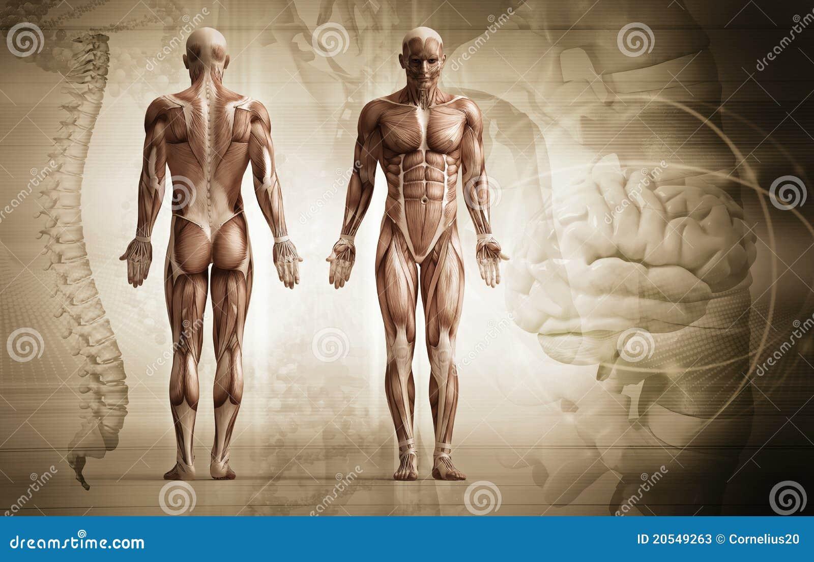 человек тела