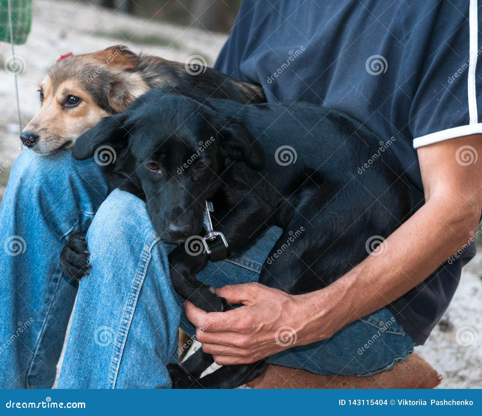 Человек sittting и держа собак snuggling вверх и отжимая друг к другу в парке