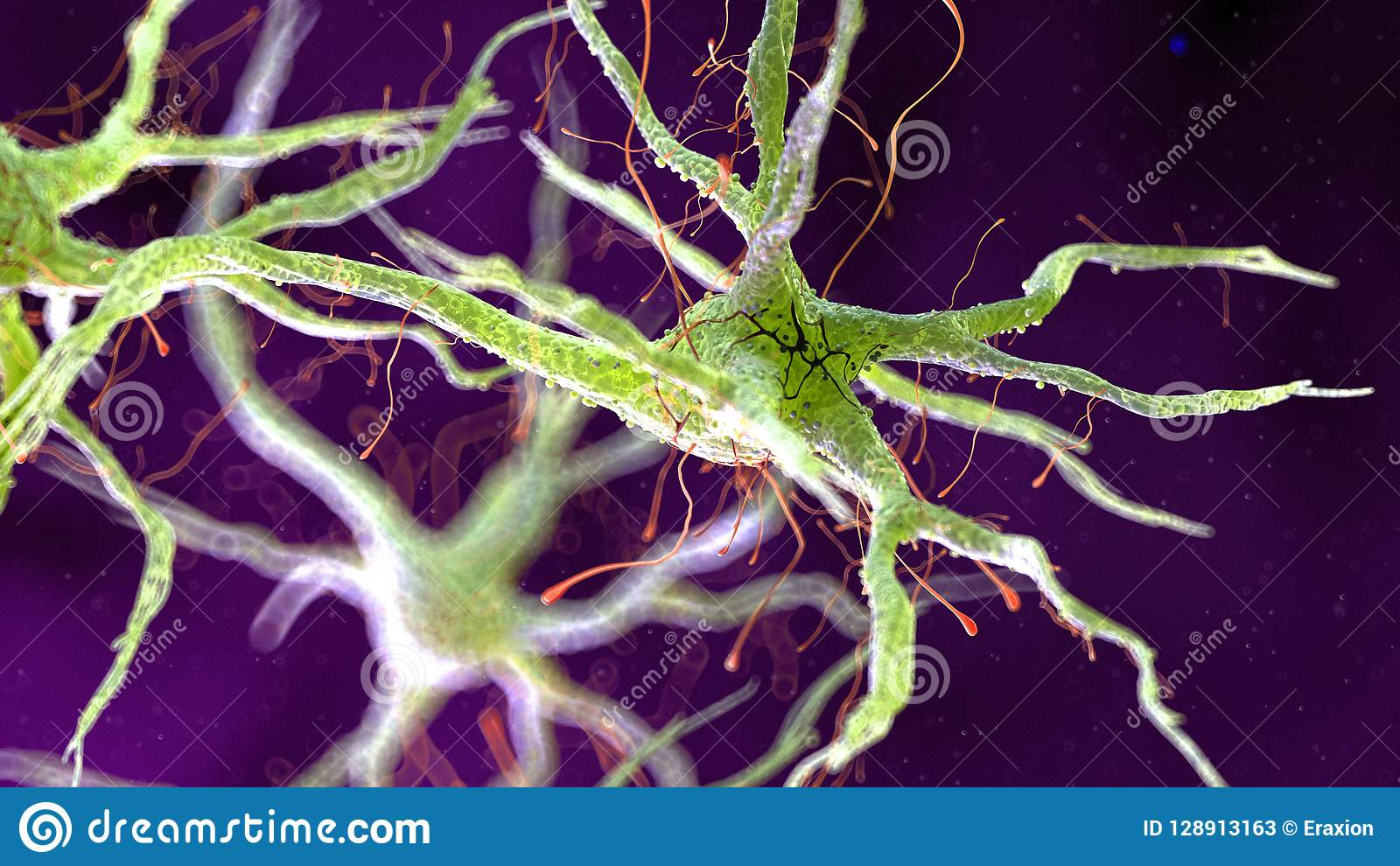 Человеческая нервная клетка
