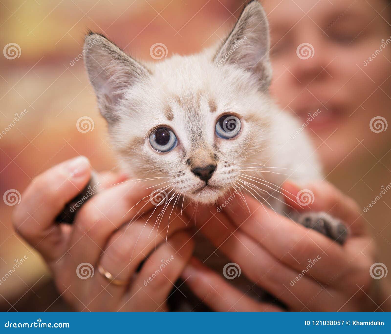 Человеческие руки тщательно держат малого котенка