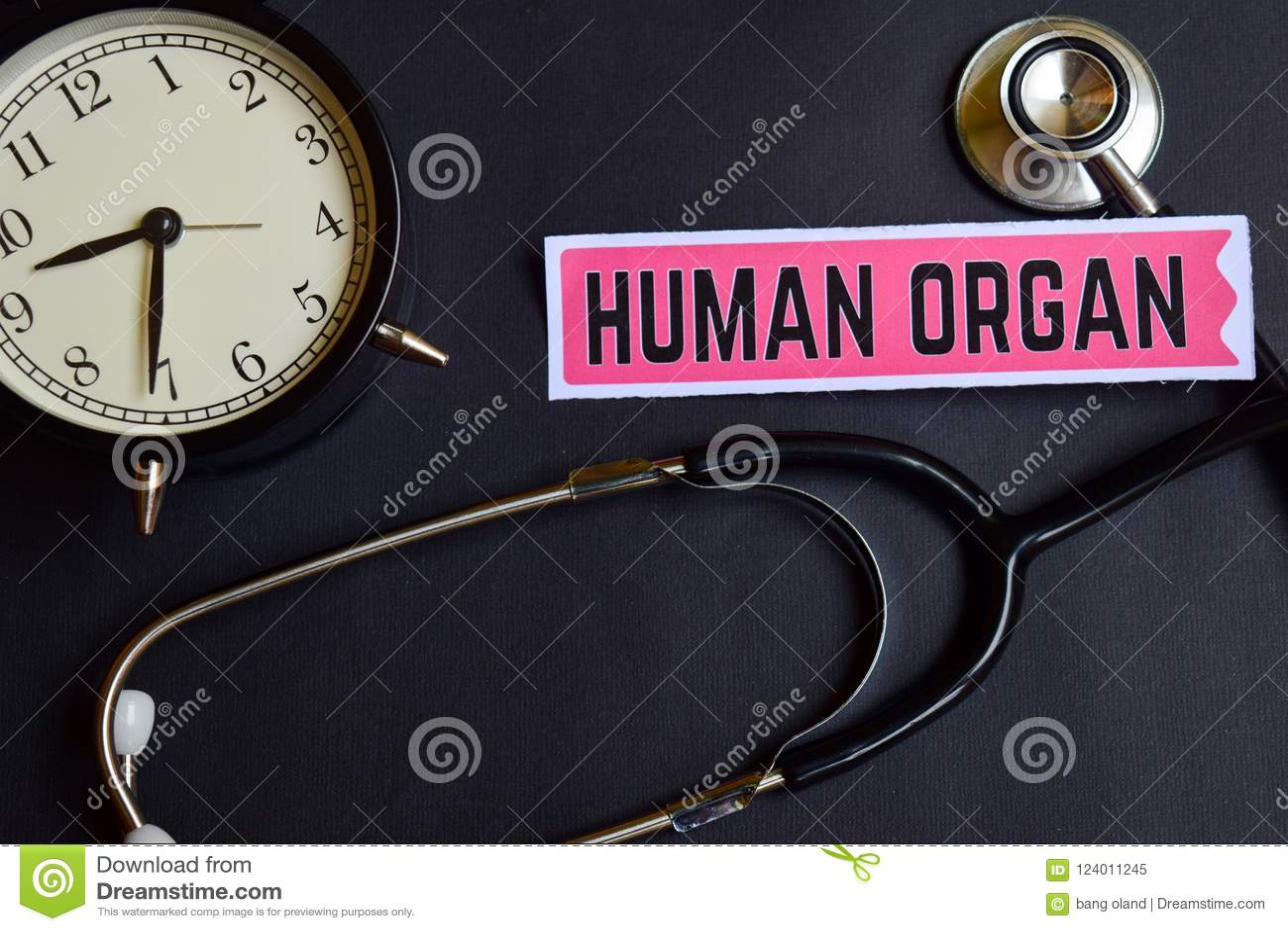 Человеческий орган на бумаге с воодушевленностью концепции здравоохранения будильник, черный стетоскоп