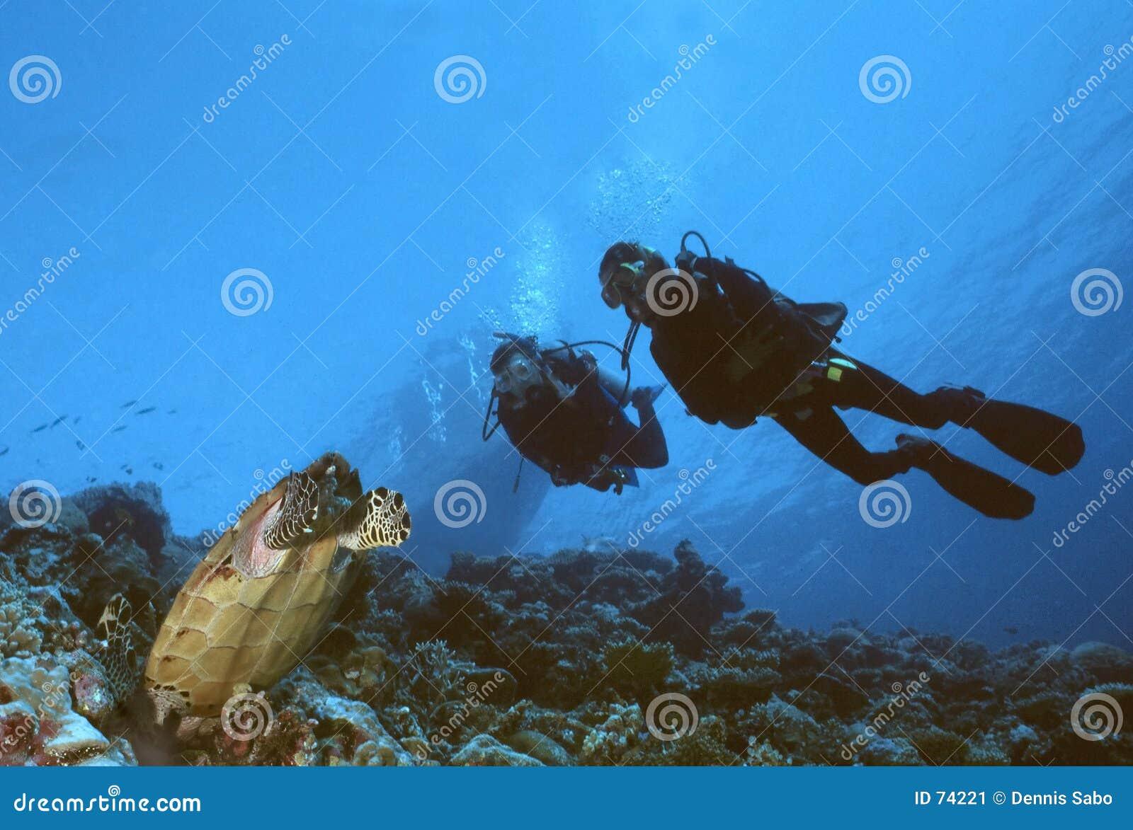 черепаха водолазов
