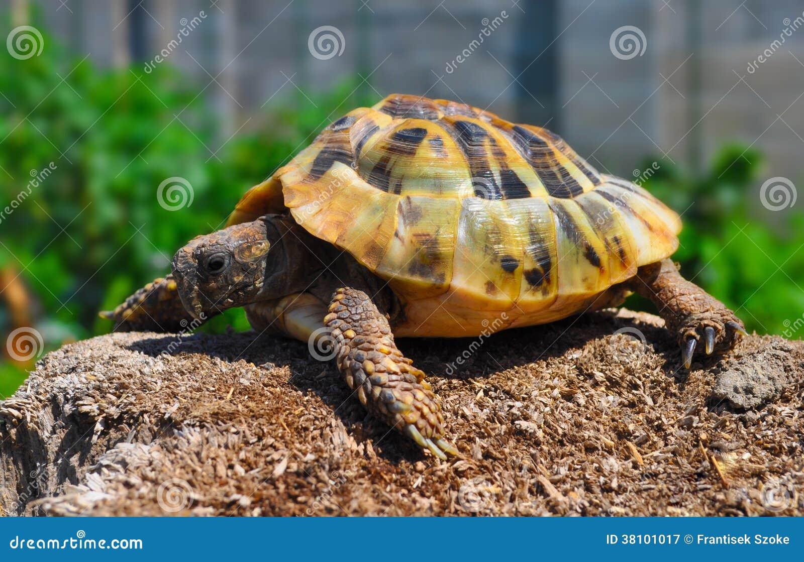Черепаха в саде