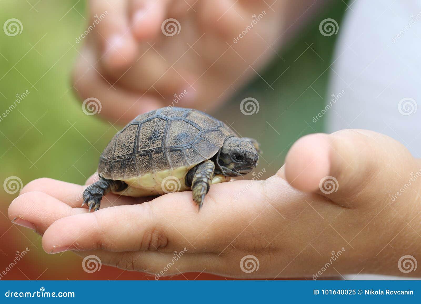 Download Черепаха младенца стоковое изображение. изображение насчитывающей перст - 101640025