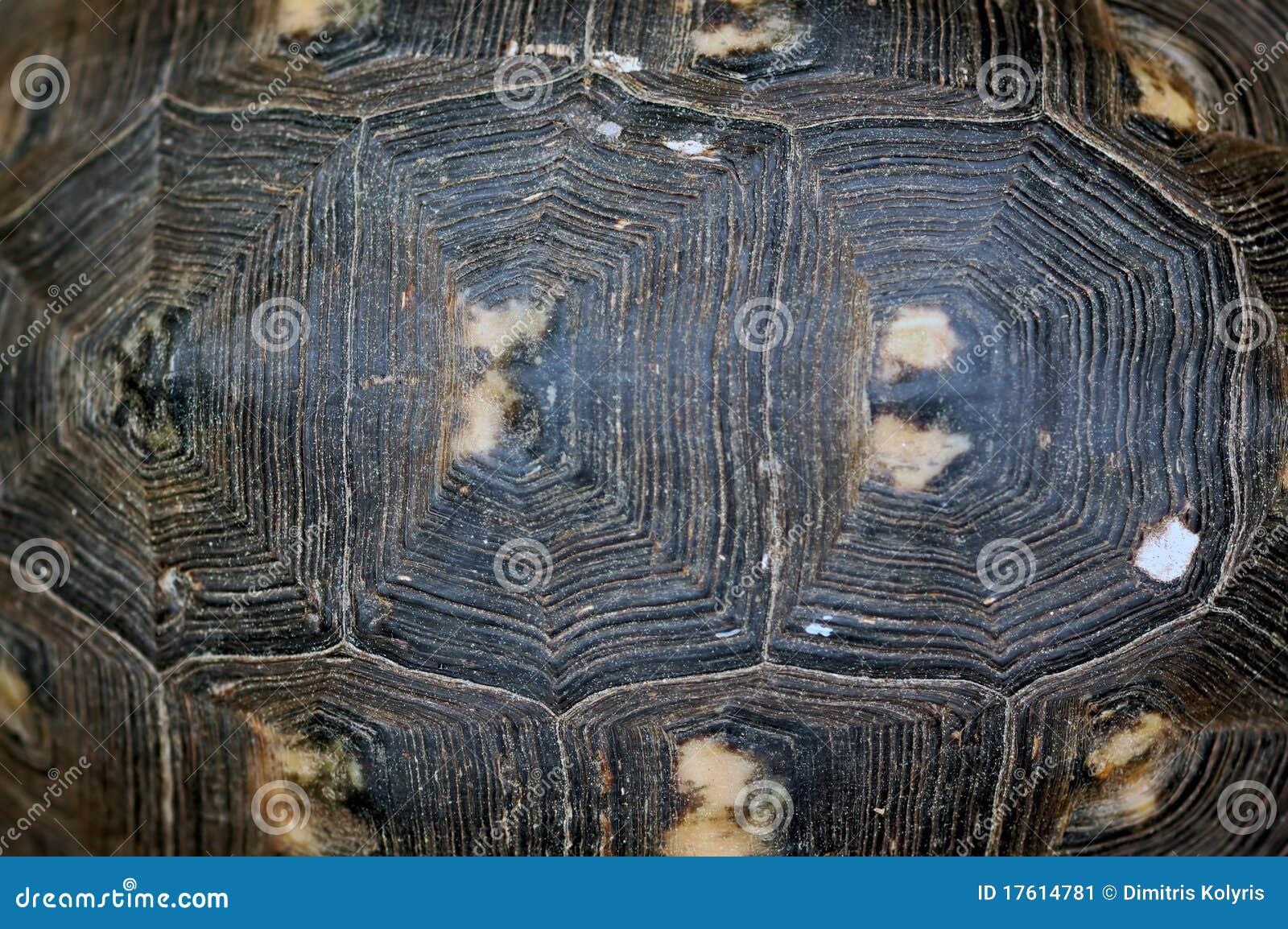 черепаха текстуры раковины