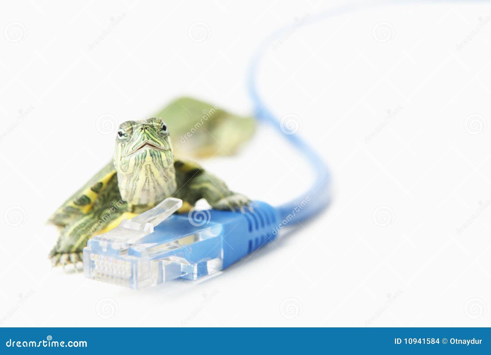 черепаха lan кабеля