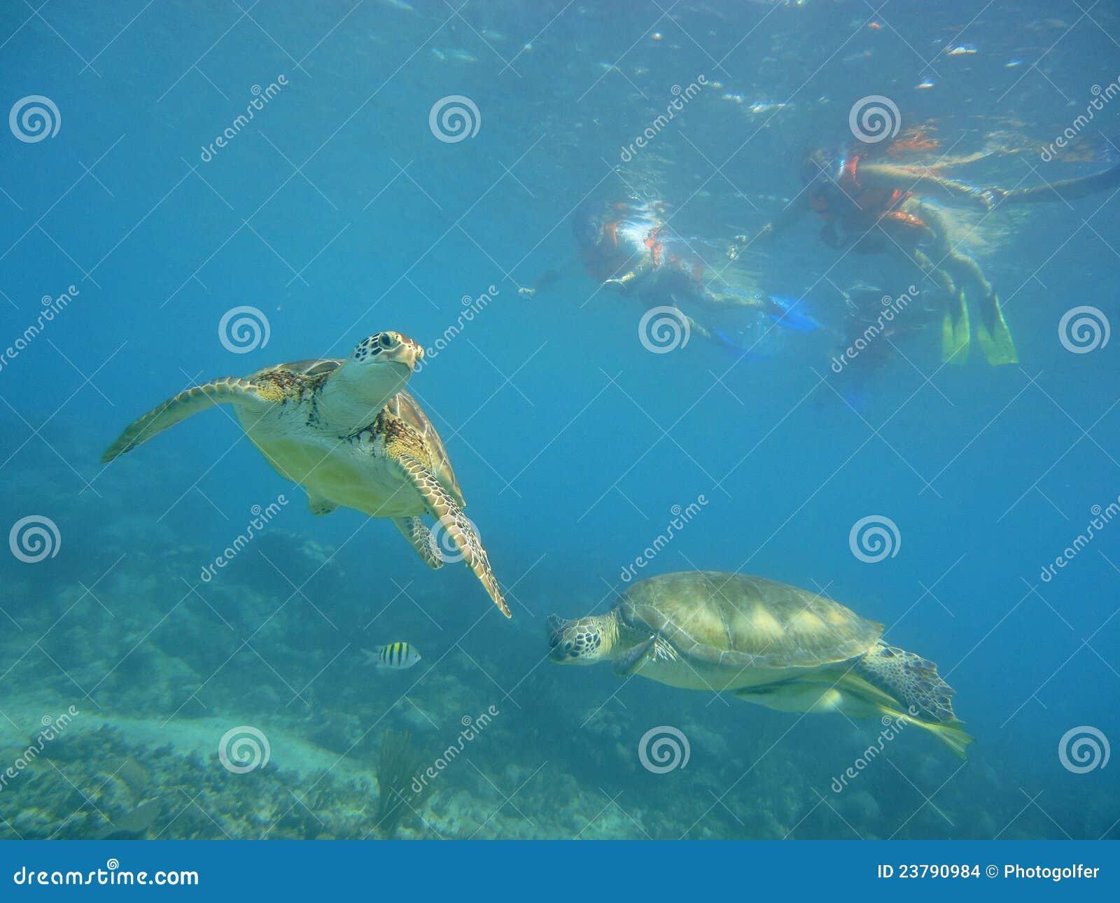 черепахи подныривания