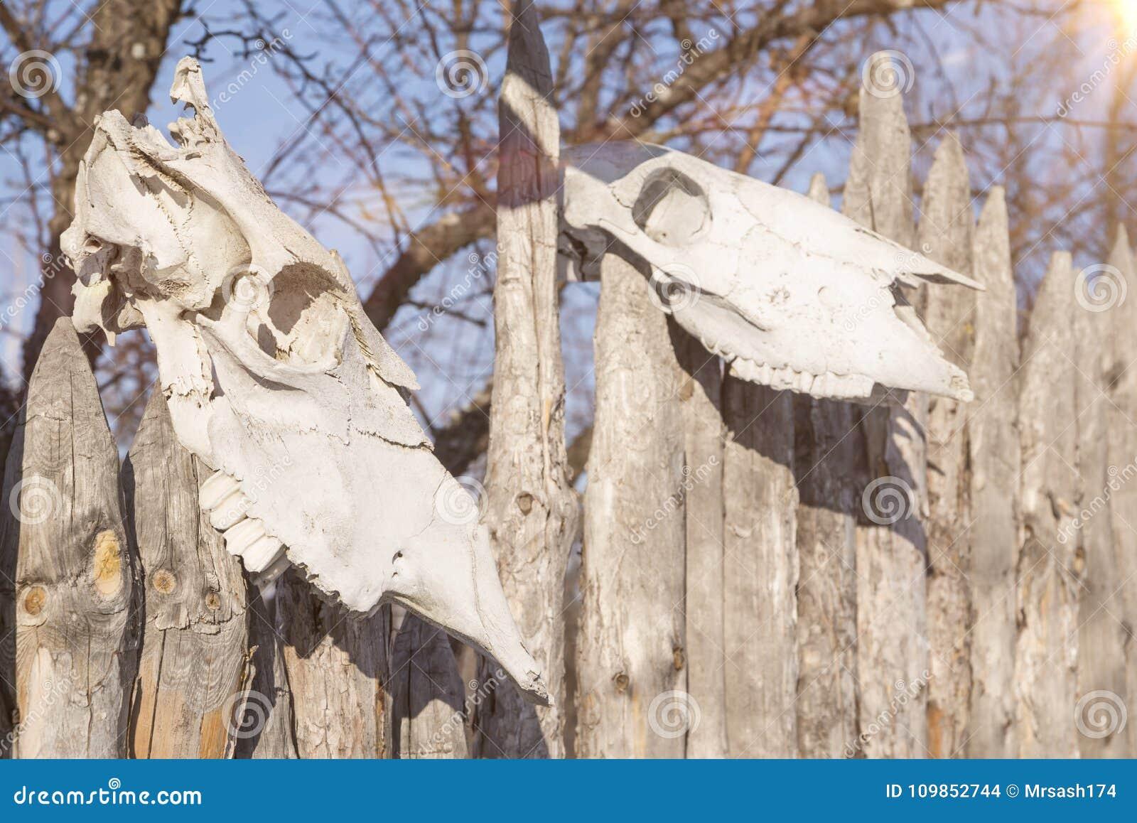 2 черепа животных на загородке ранчо