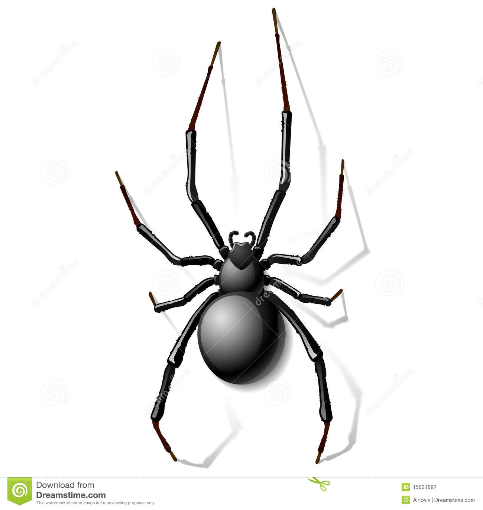черная вдова спайдера