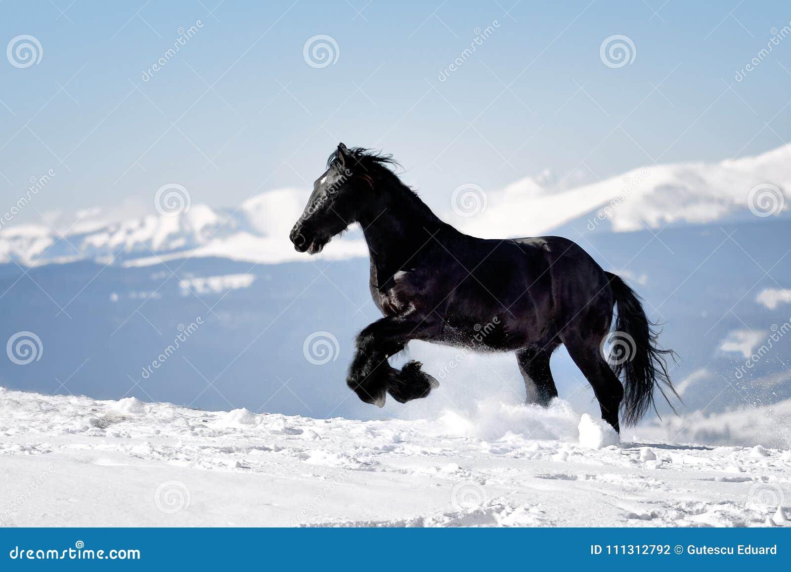 Черная лошадь в зимнем времени с горами на заднем плане
