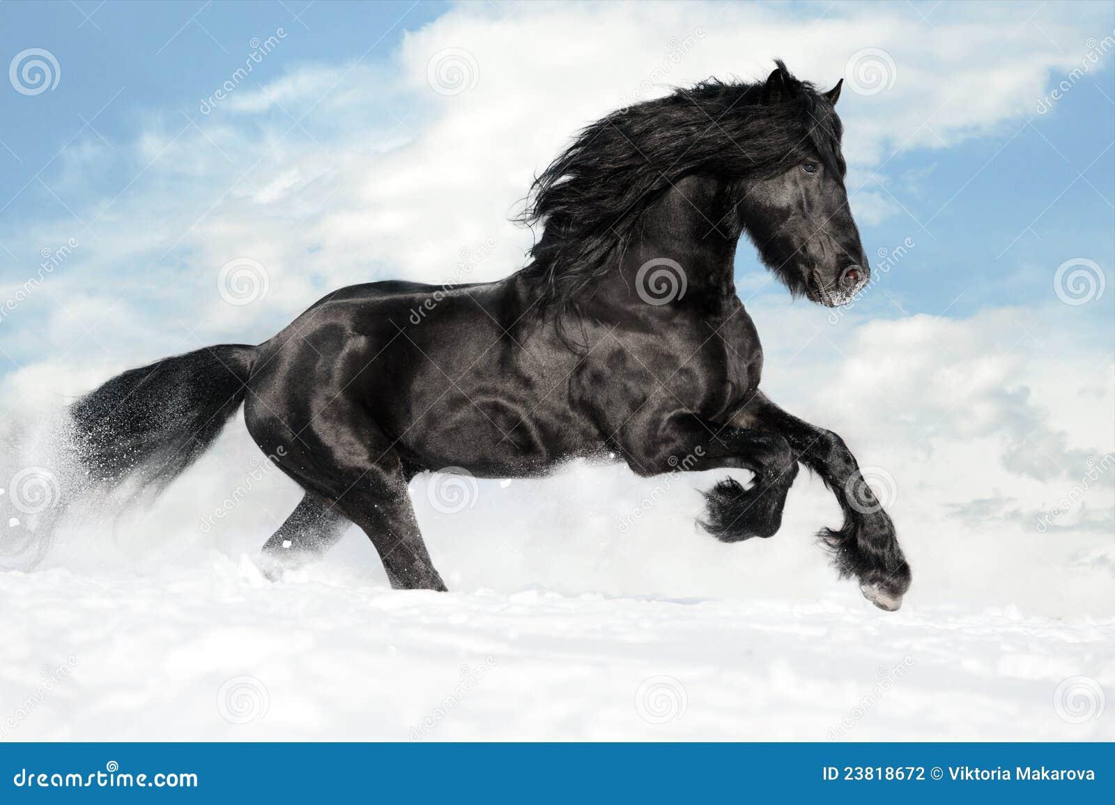 черная лошадь gallop бежит снежок