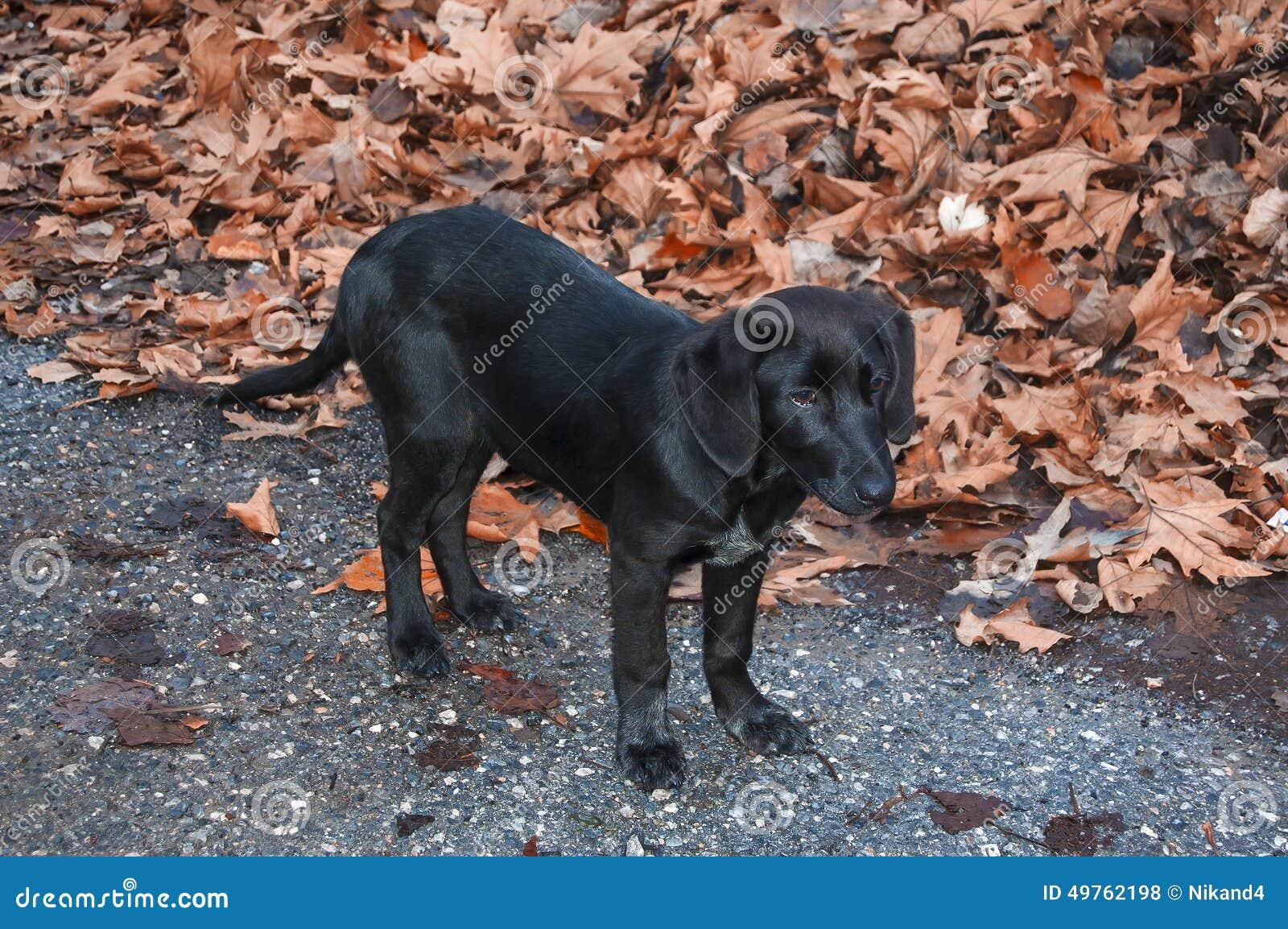 Черная осень картинки