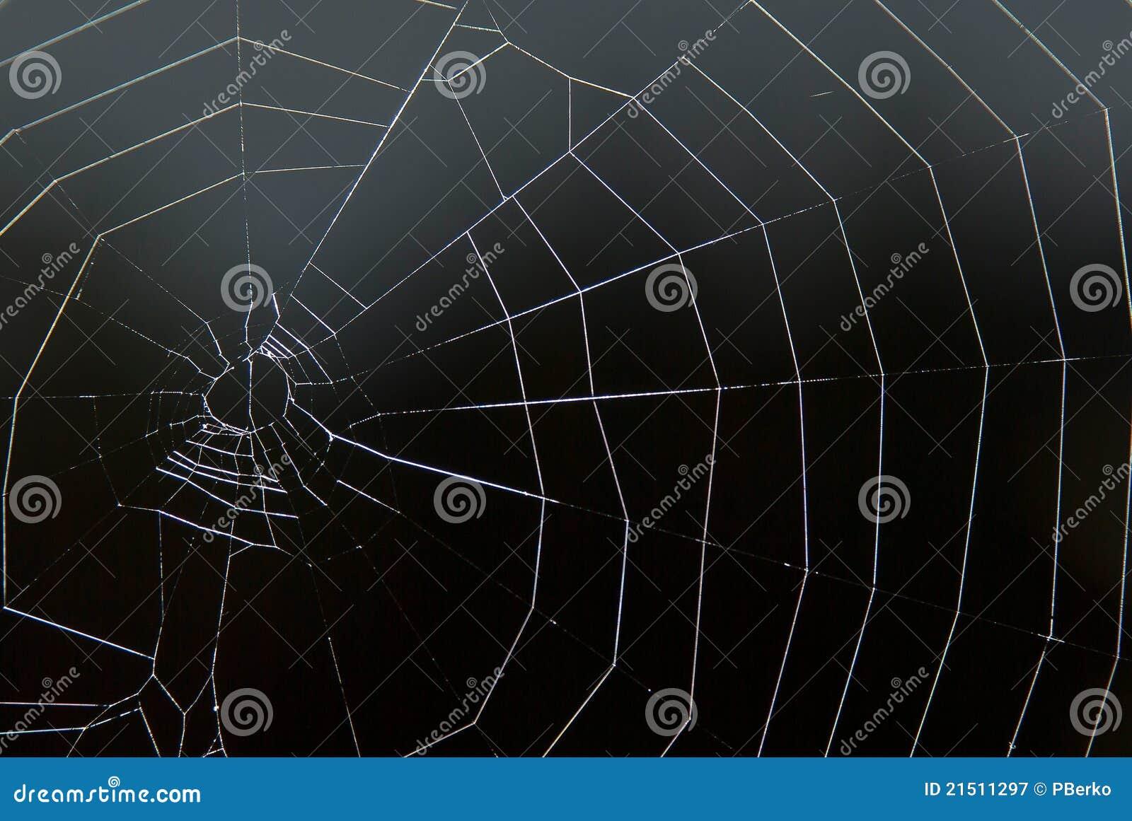 черная сеть паука s