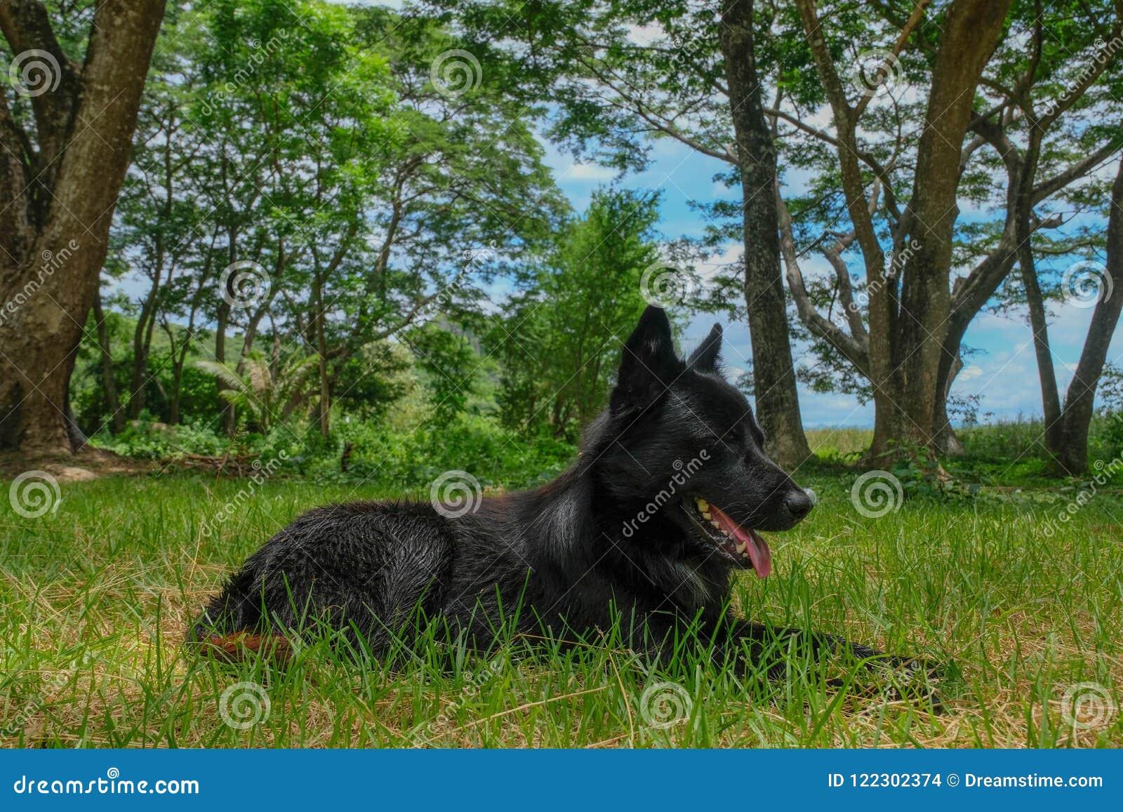Черная собака в лесе