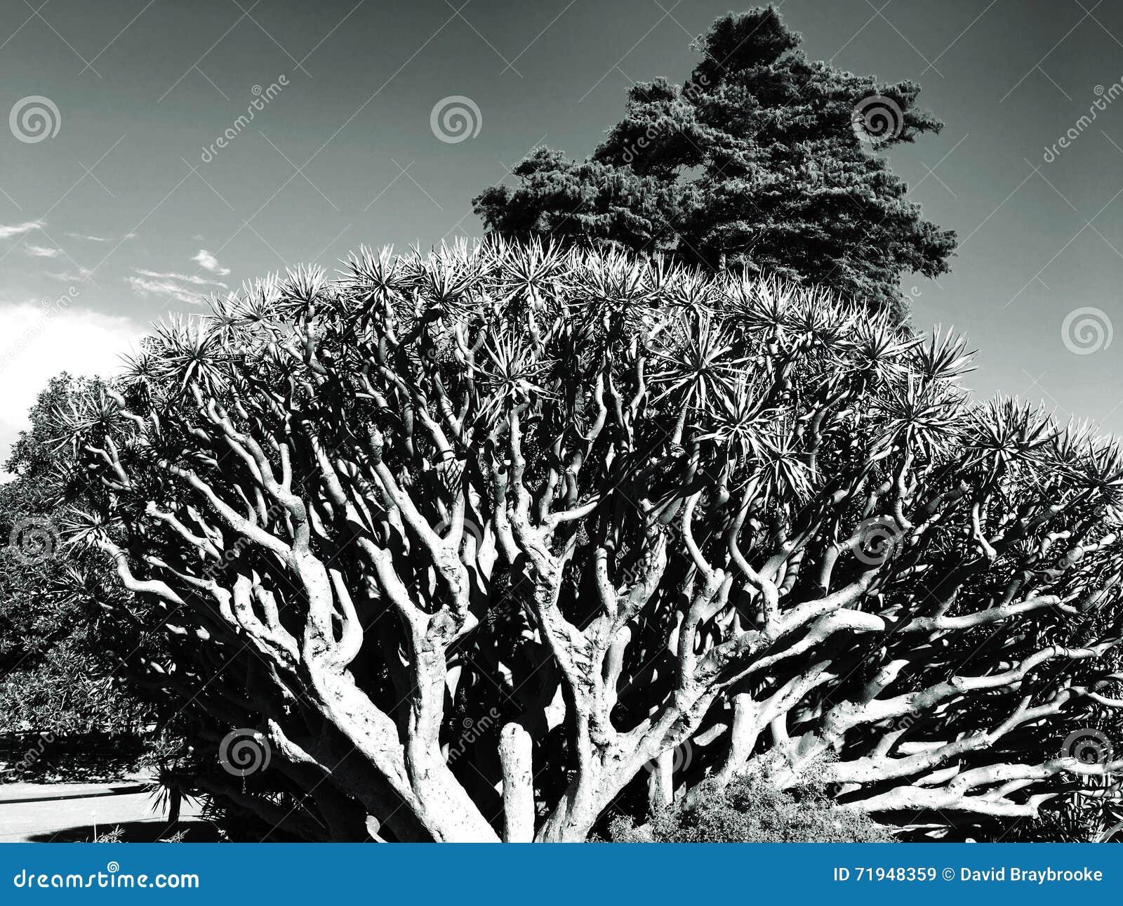 Черно-белый ландшафт деревьев