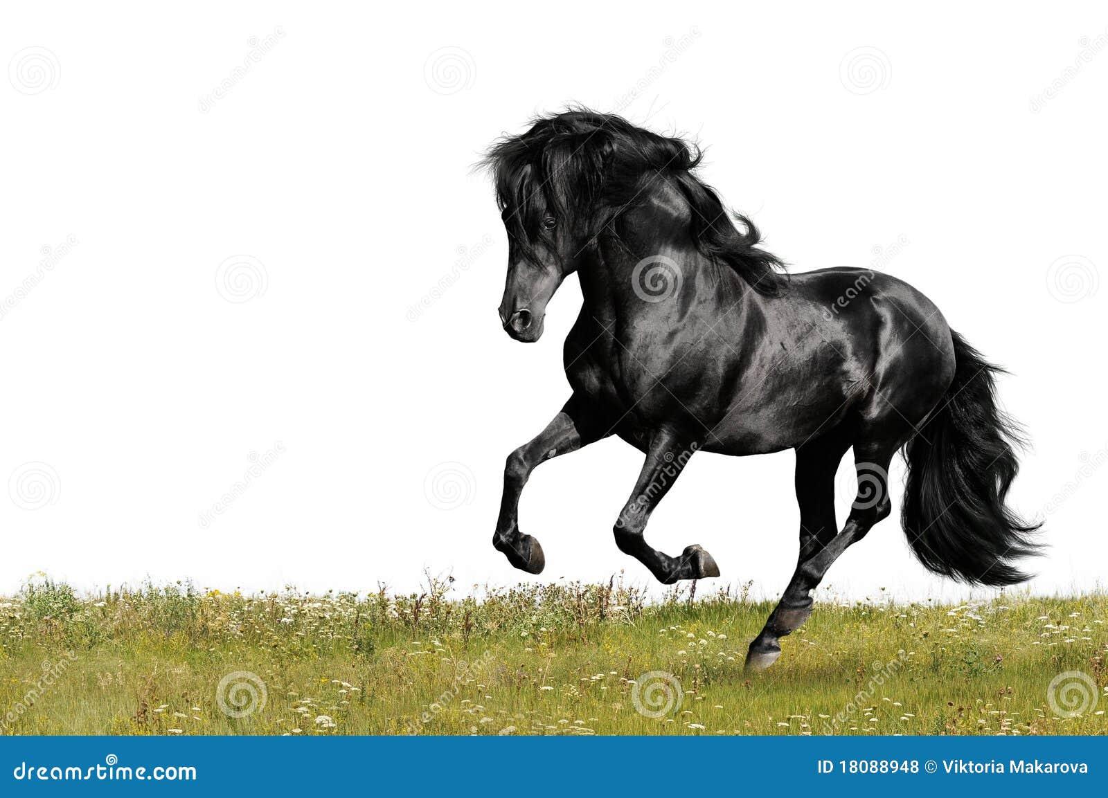 черные бега лошади gallop