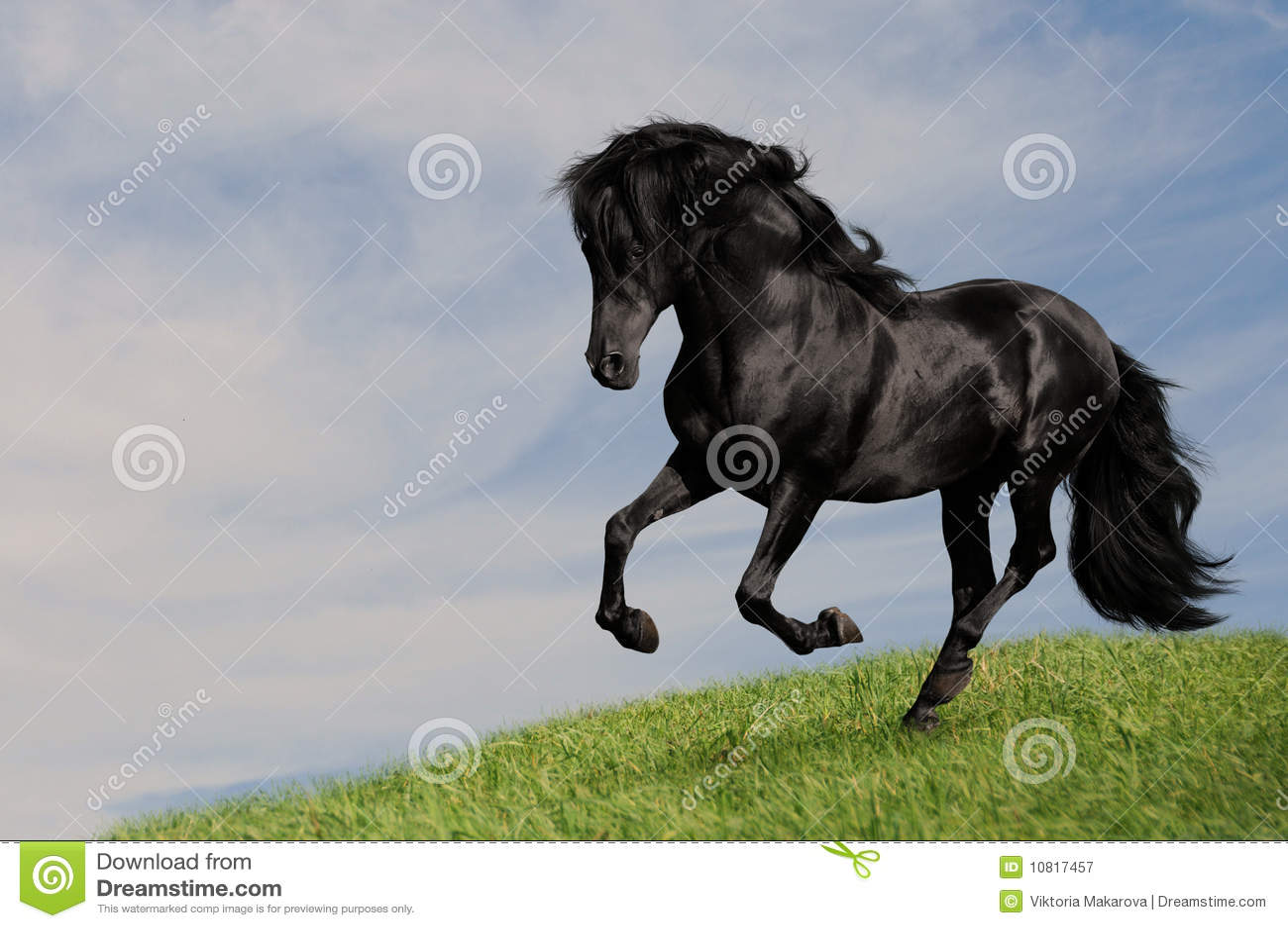 черный жеребец бега om лужка лошади gallop