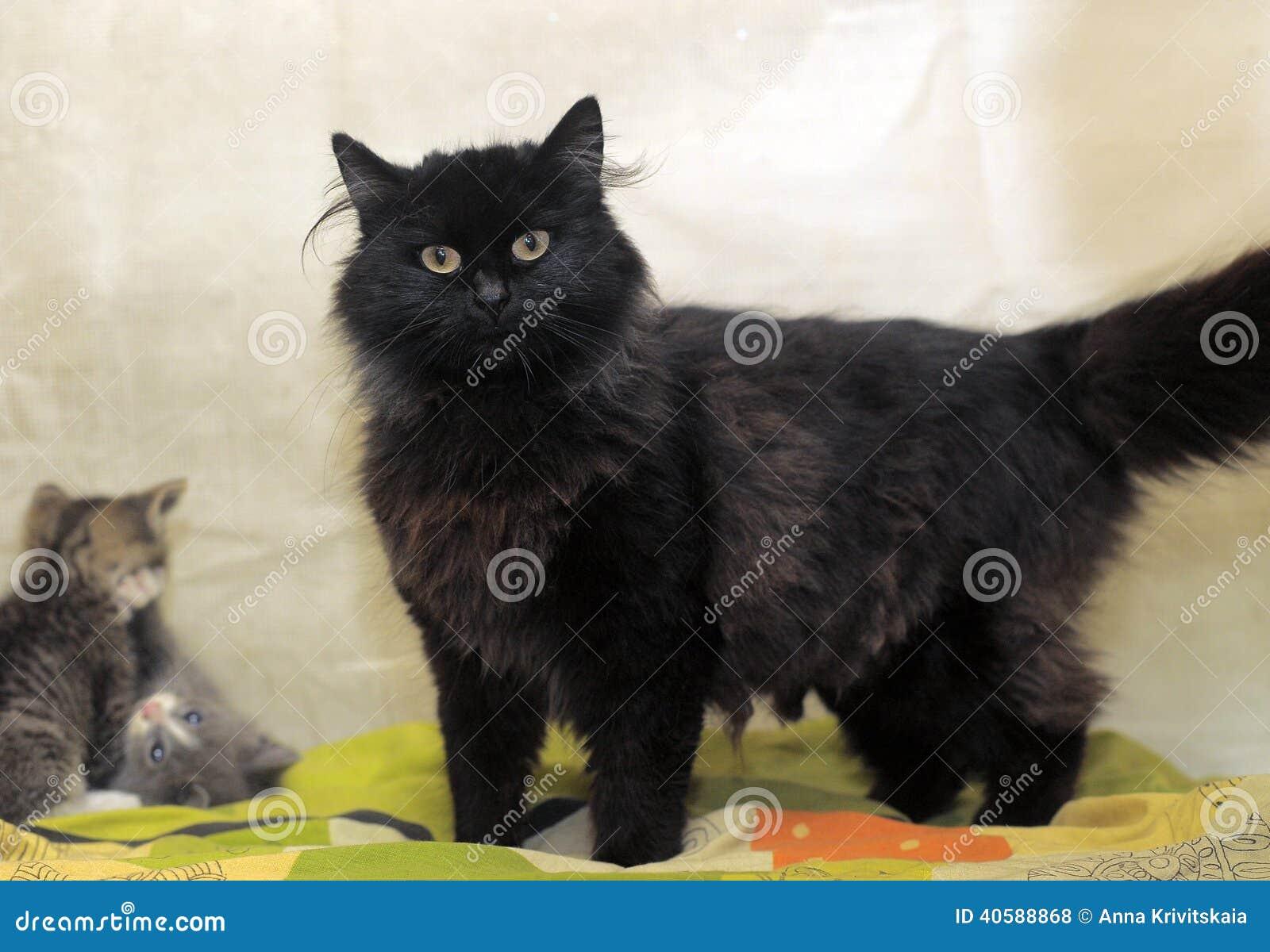 Черный кот и котята