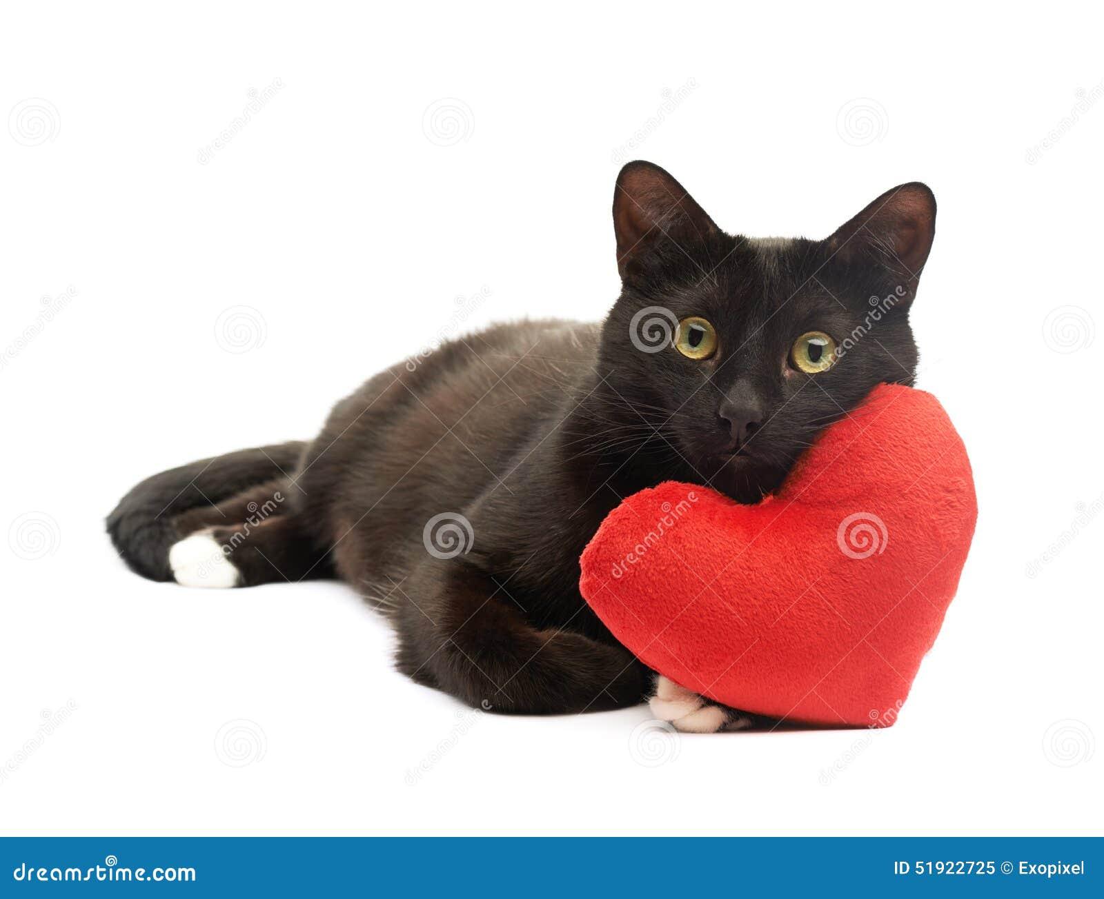 Фото коты с сердцем