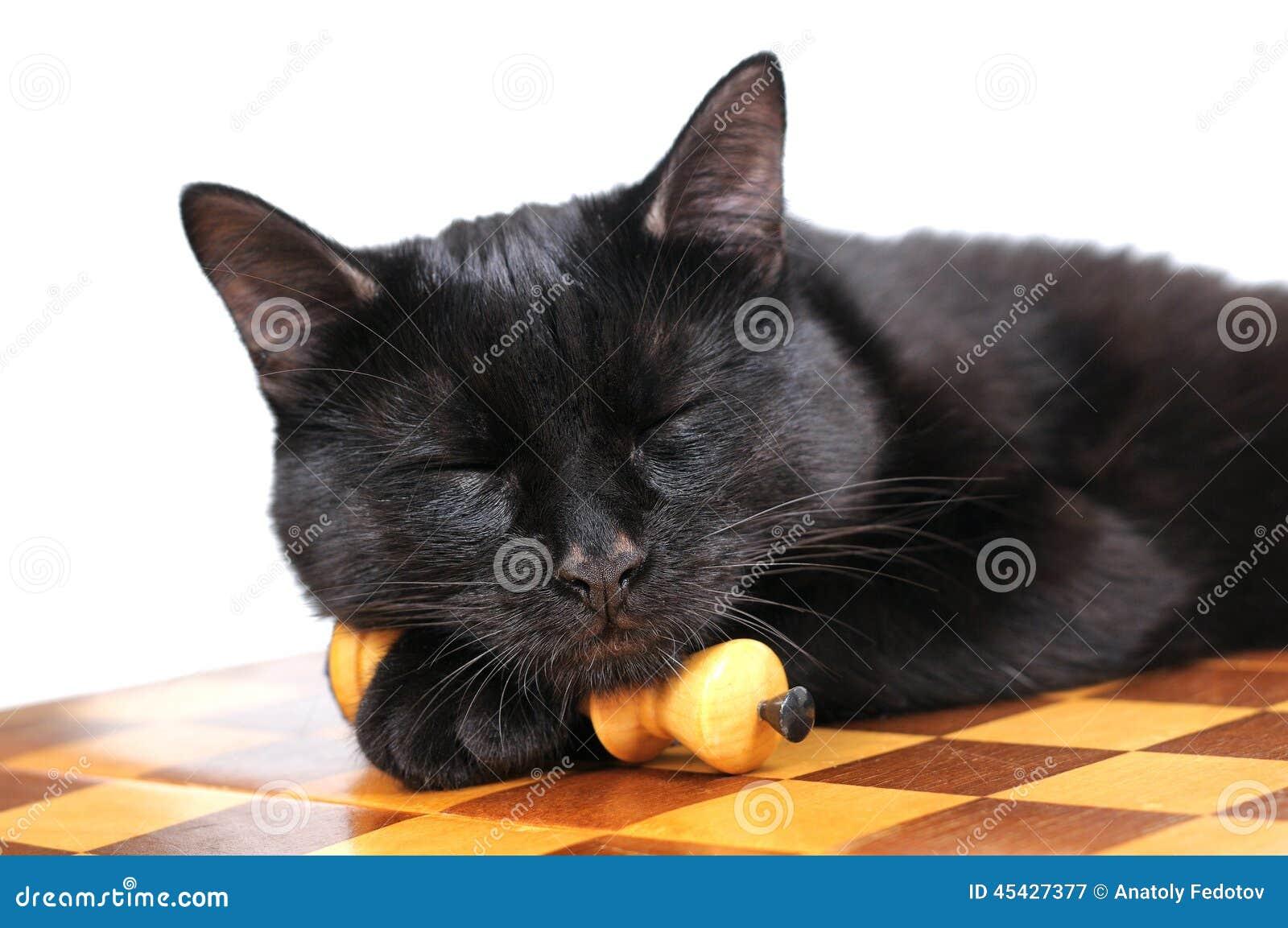 Кот черный спит