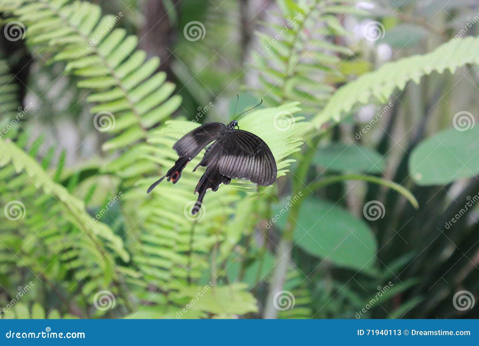 Черный полет бабочек