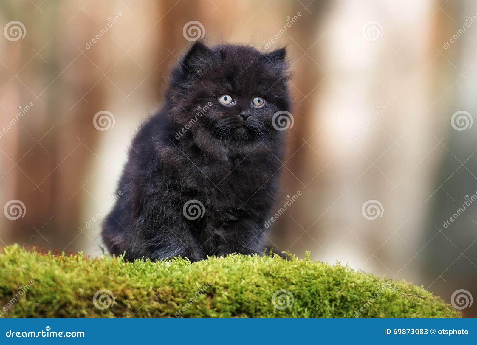 черные пушистые котята фото