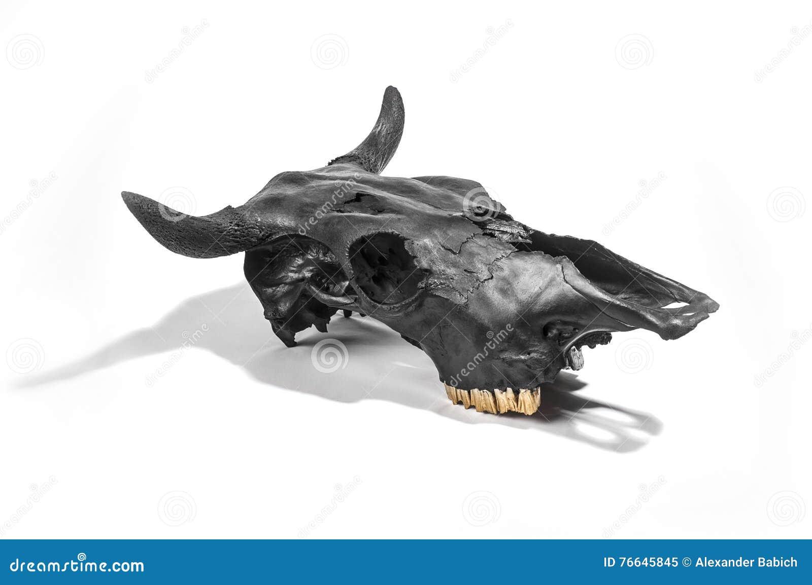 челюсть быка