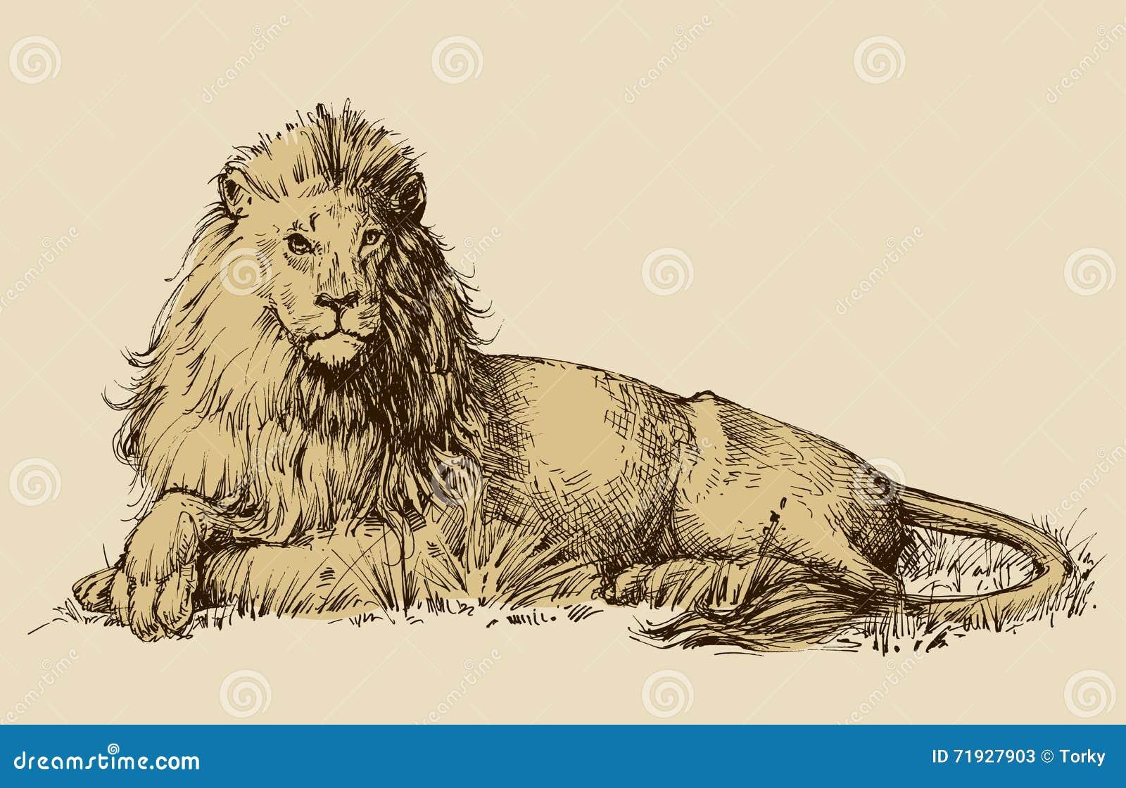 Чертеж льва сидя