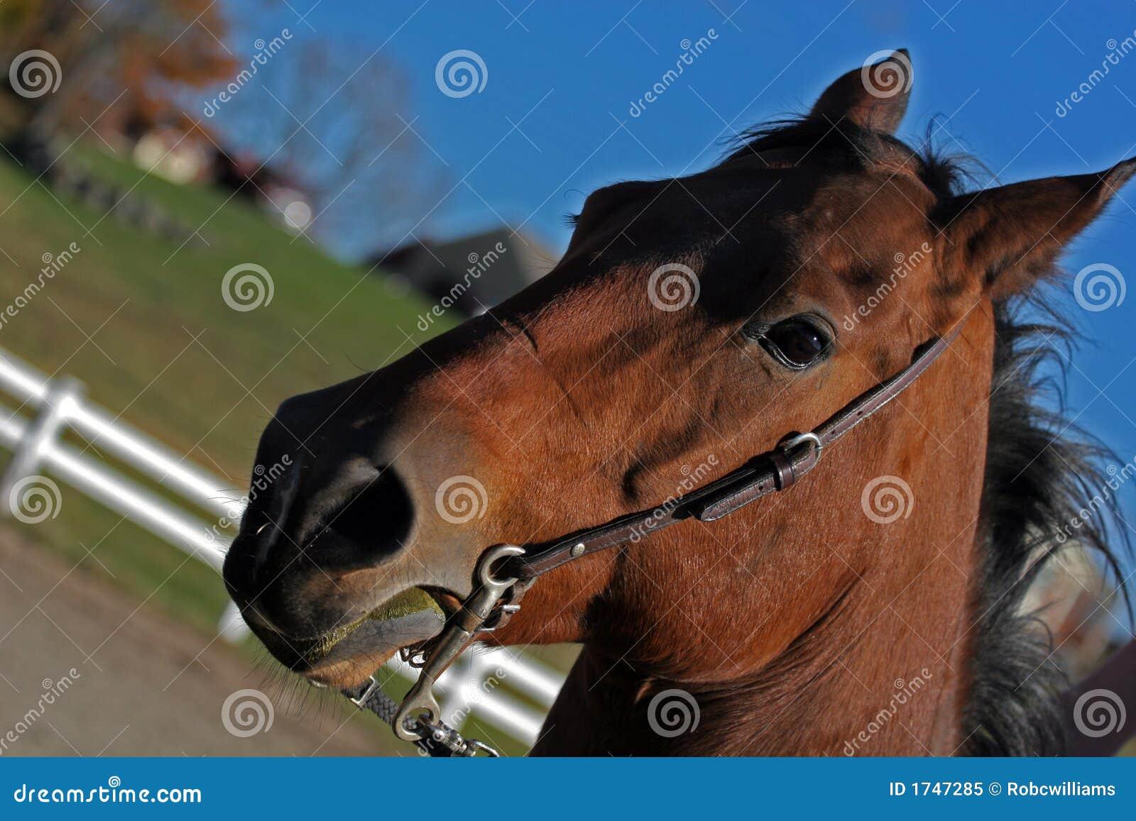 чик лошади