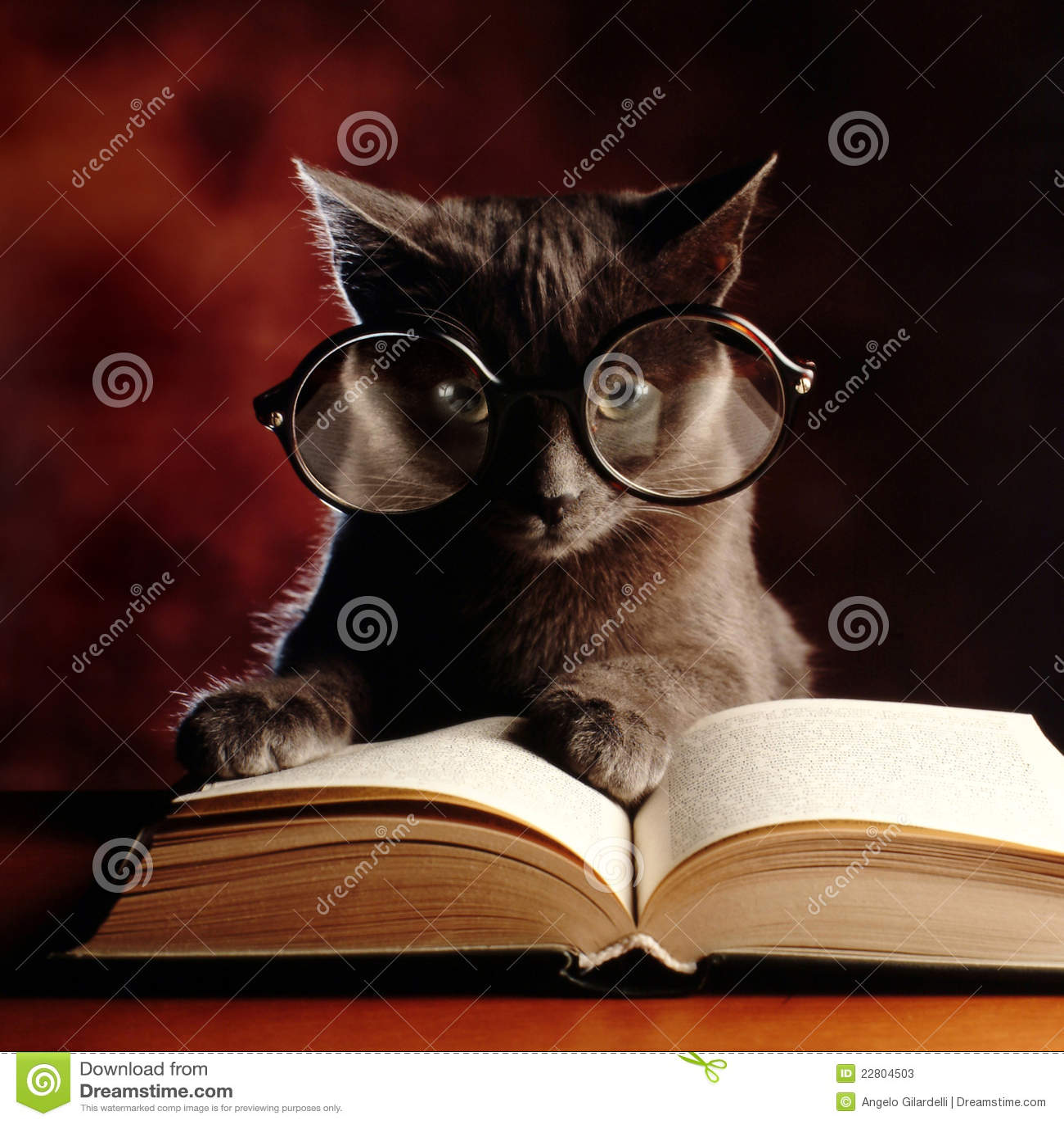 чтение киски книги