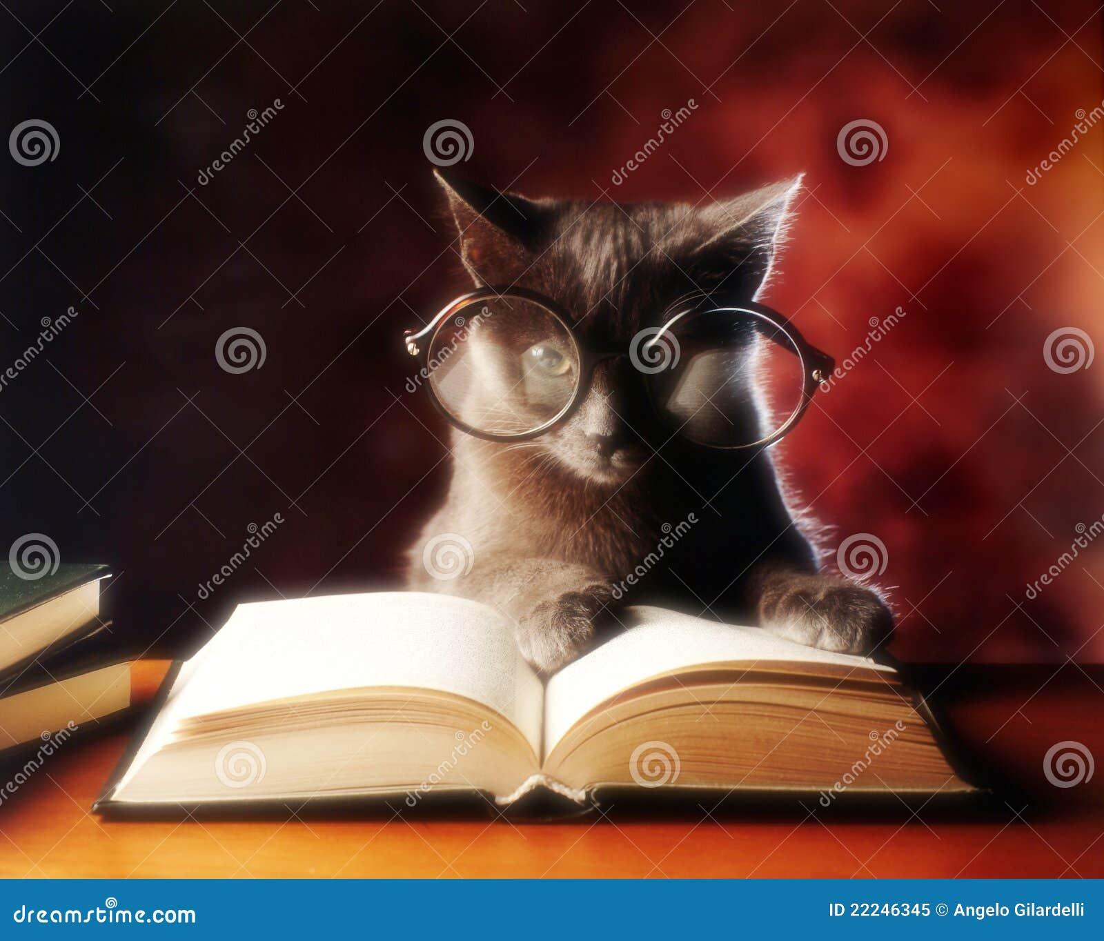 чтение кота