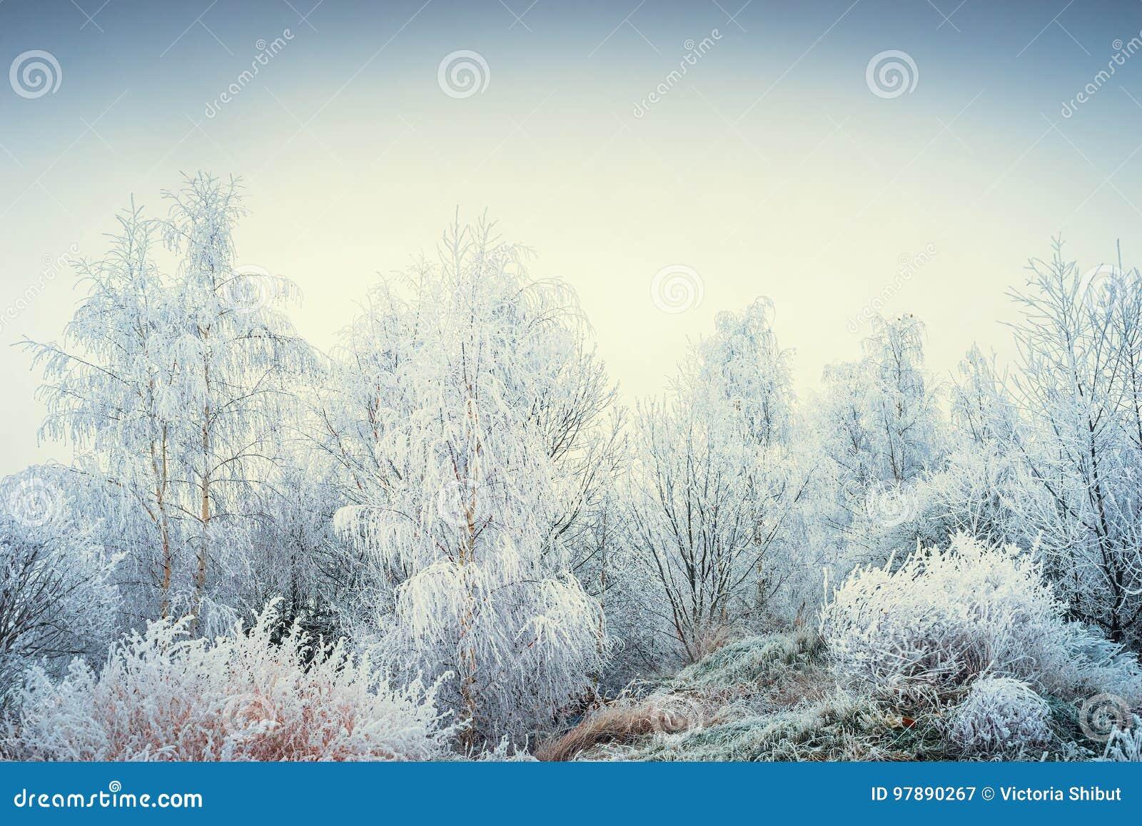 Чудесный ландшафт зимы с снежными деревьями и травами на предпосылке неба