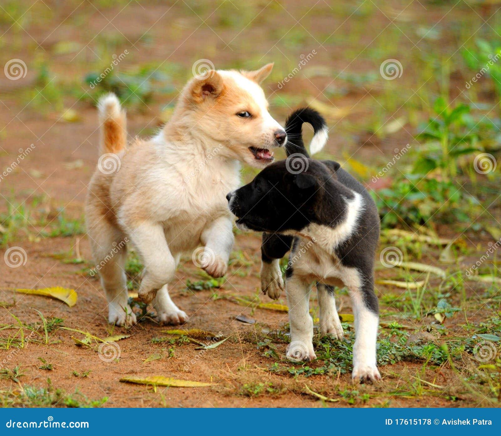 шаловливые щенята