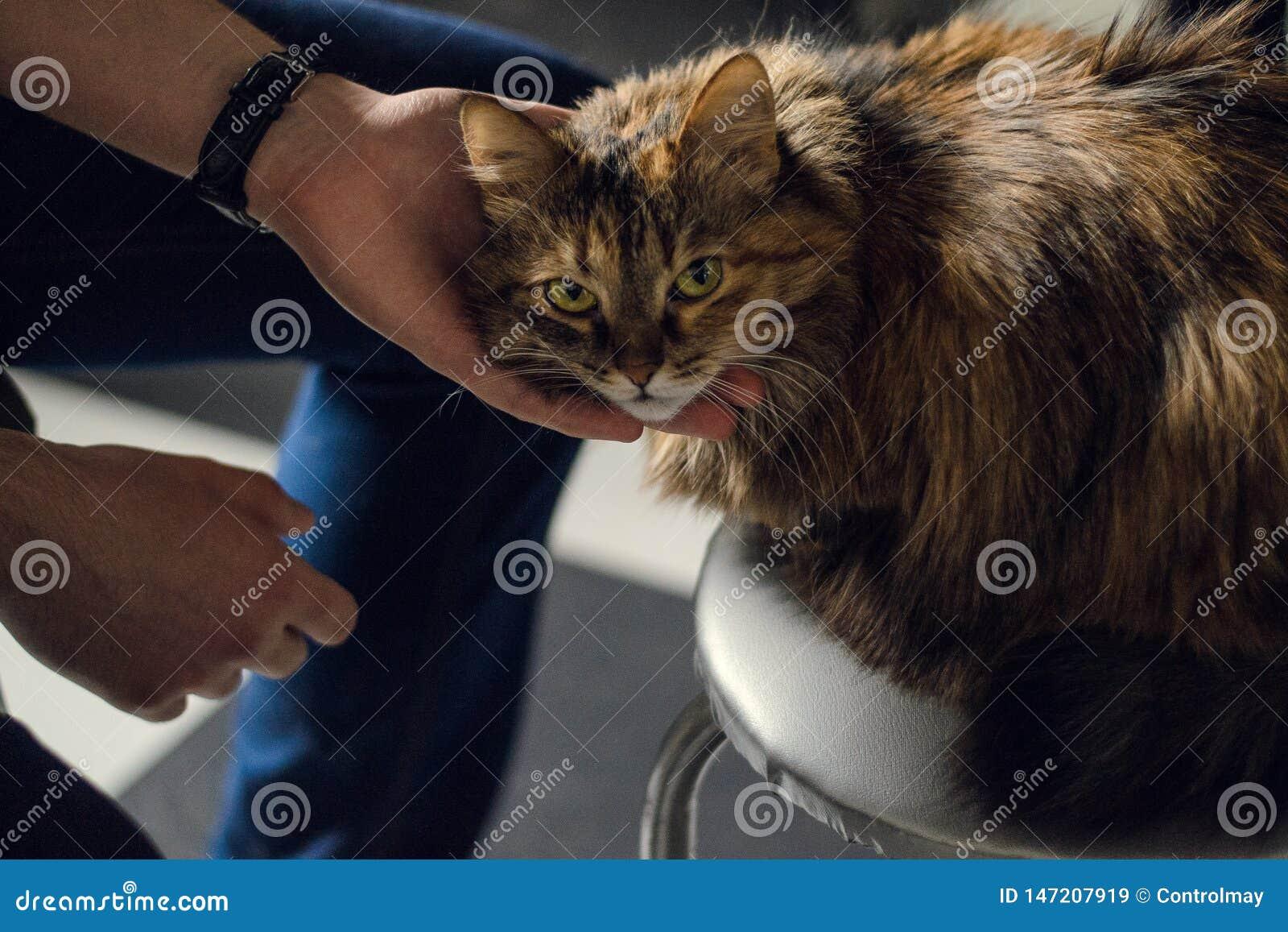Шаловливый кот взгляда