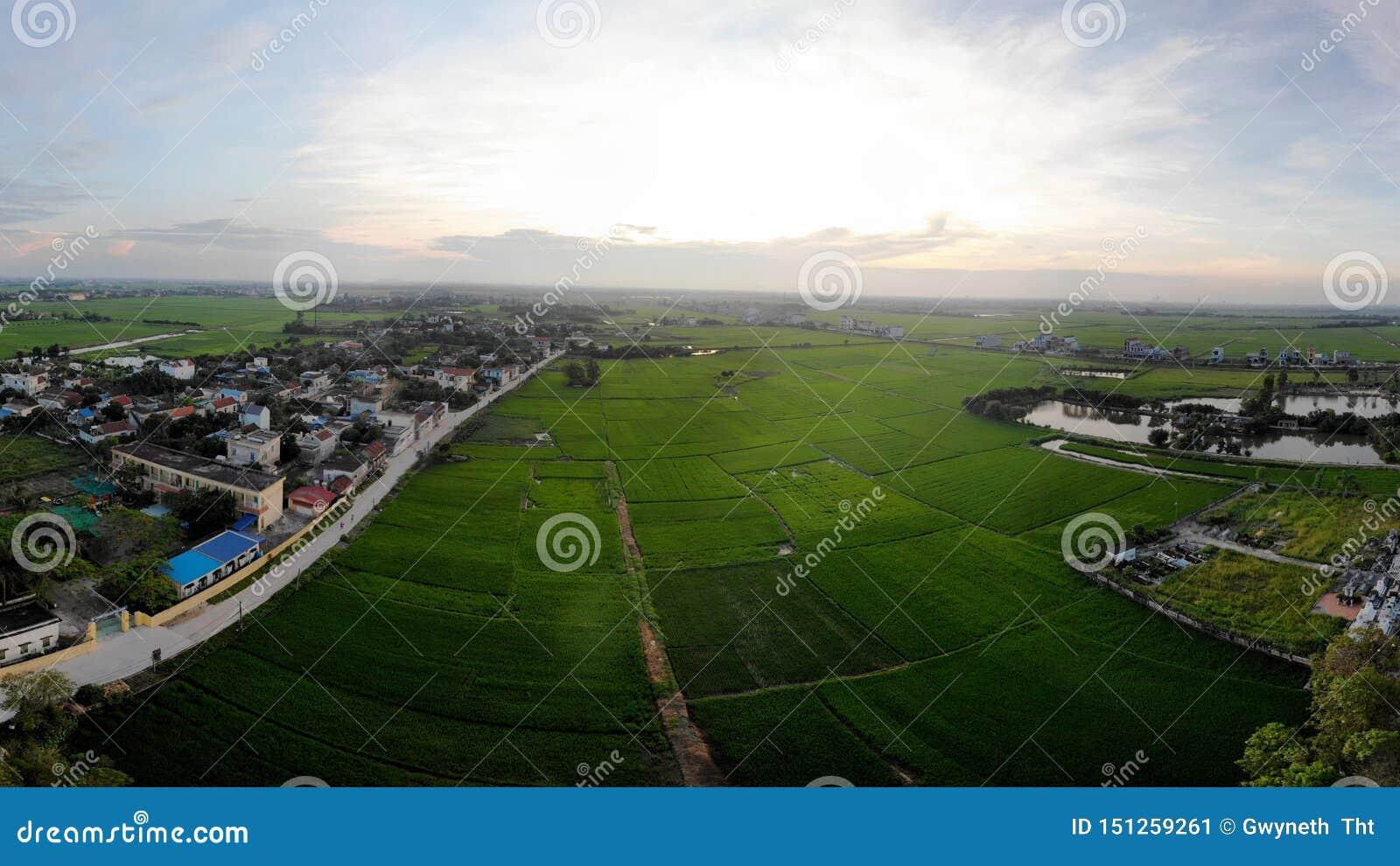 Шарм зеленых полей риса держит ландшафт деревни