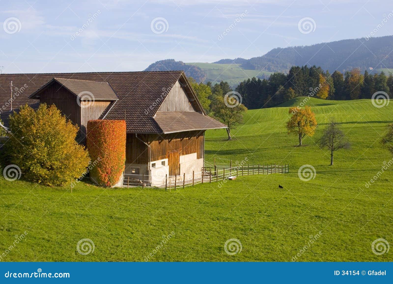 швейцарец фермы i