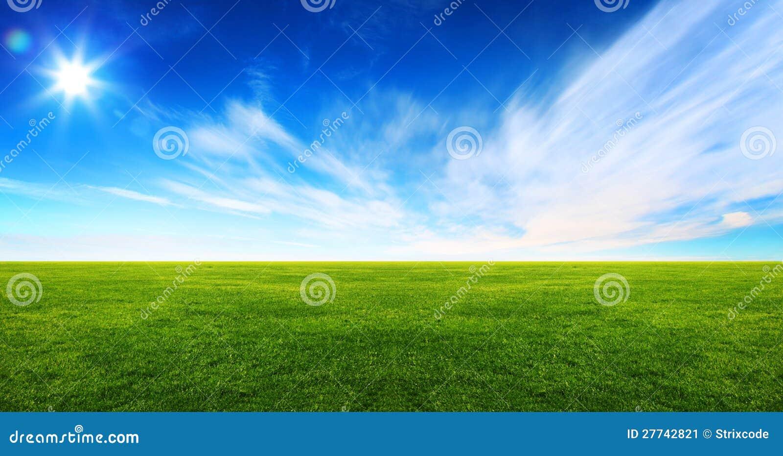 Широкое изображение поля зеленой травы
