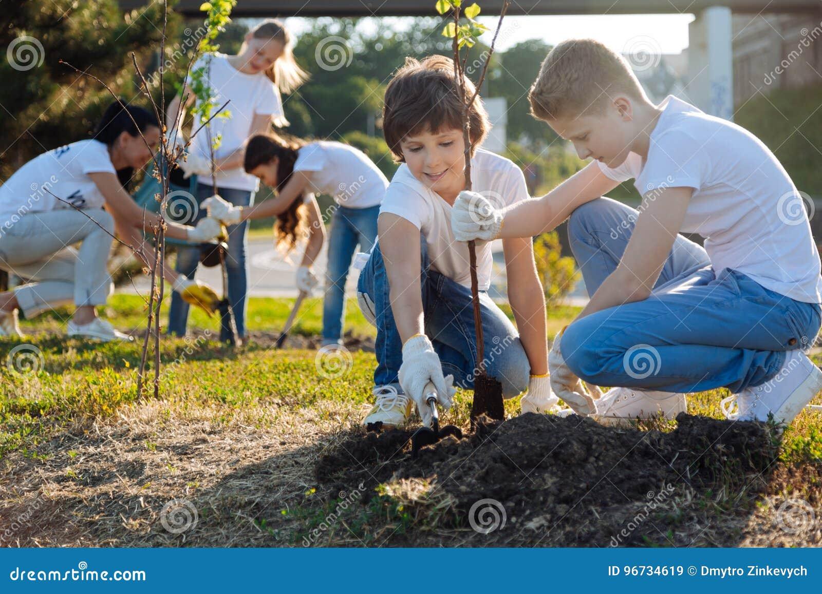 Школьники засаживая молодые фруктовые дерев дерев