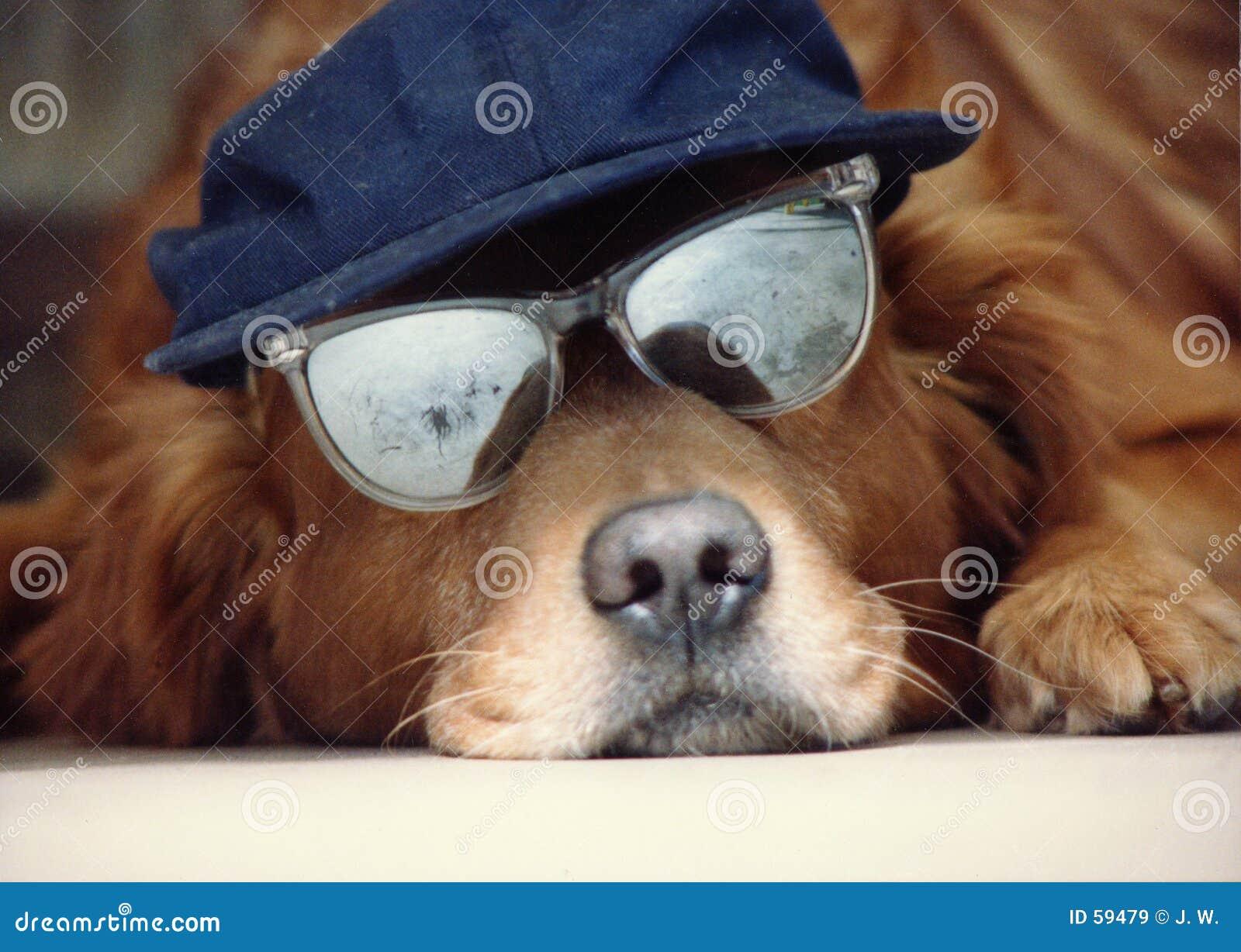 шлем собаки