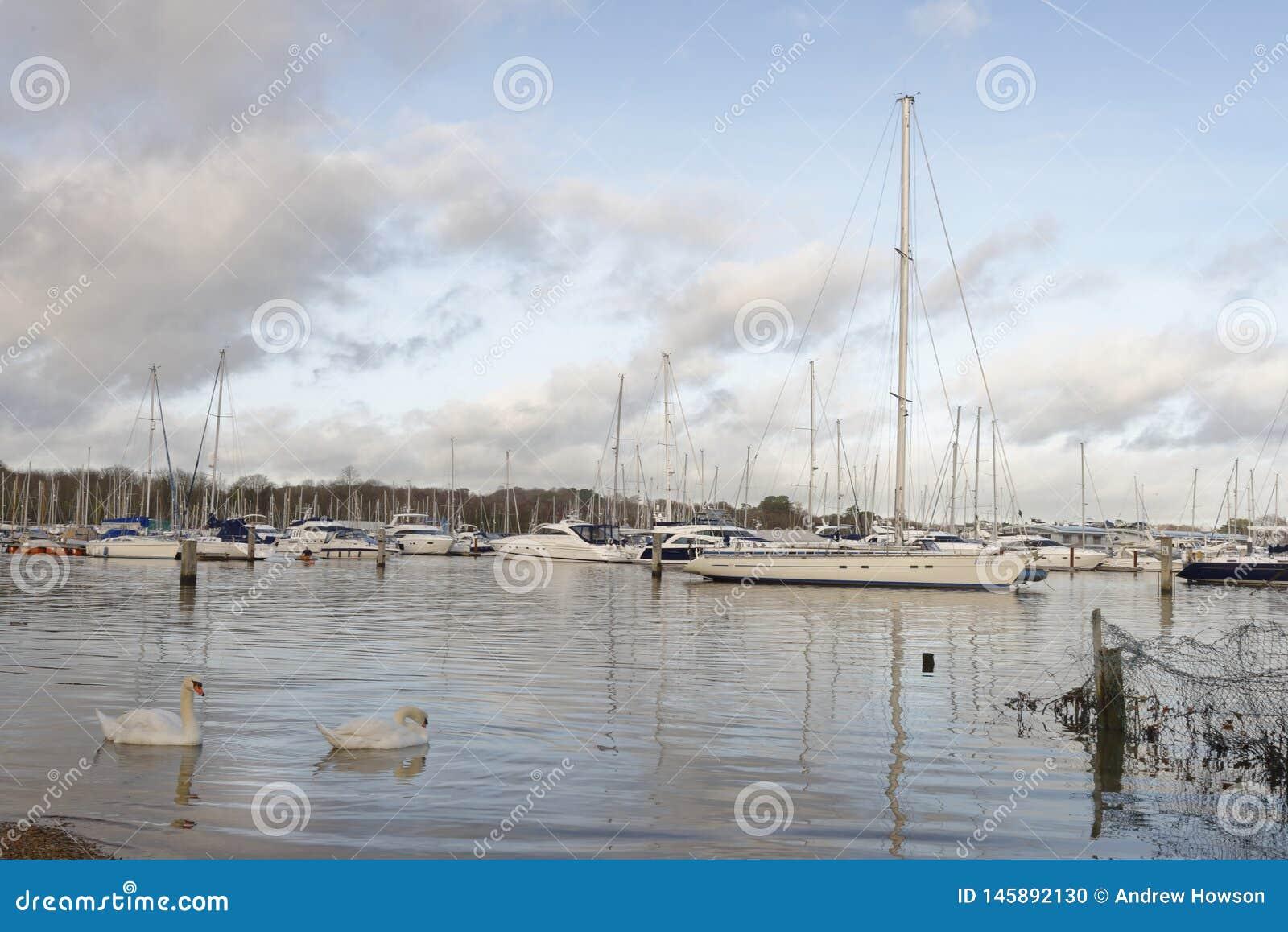 Шлюпки и яхты причаленные в гавани, bursledon, Англии, Европе лебеди