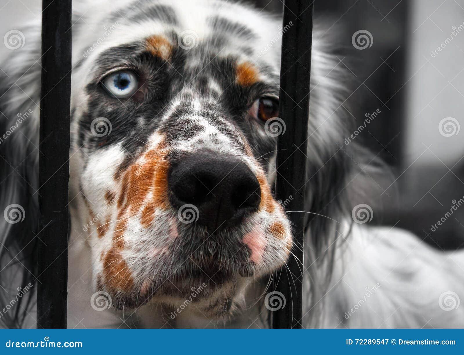 Download штанги за собакой унылой стоковое изображение. изображение насчитывающей тоскливость - 72289547