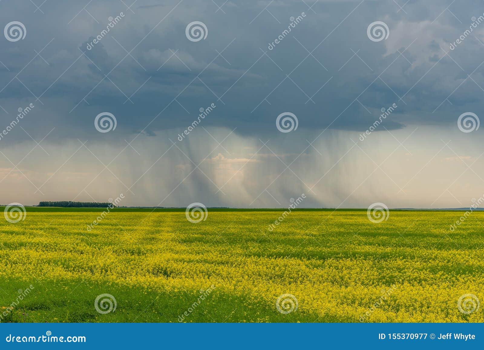 Штормы прерии подметают над канола полями