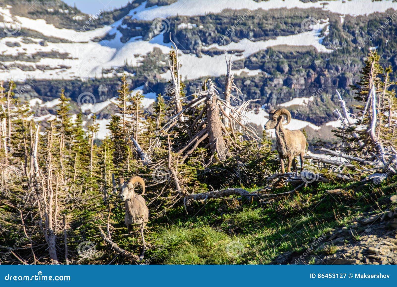 Штоссель горы в национальном парке ледника, Монтане США