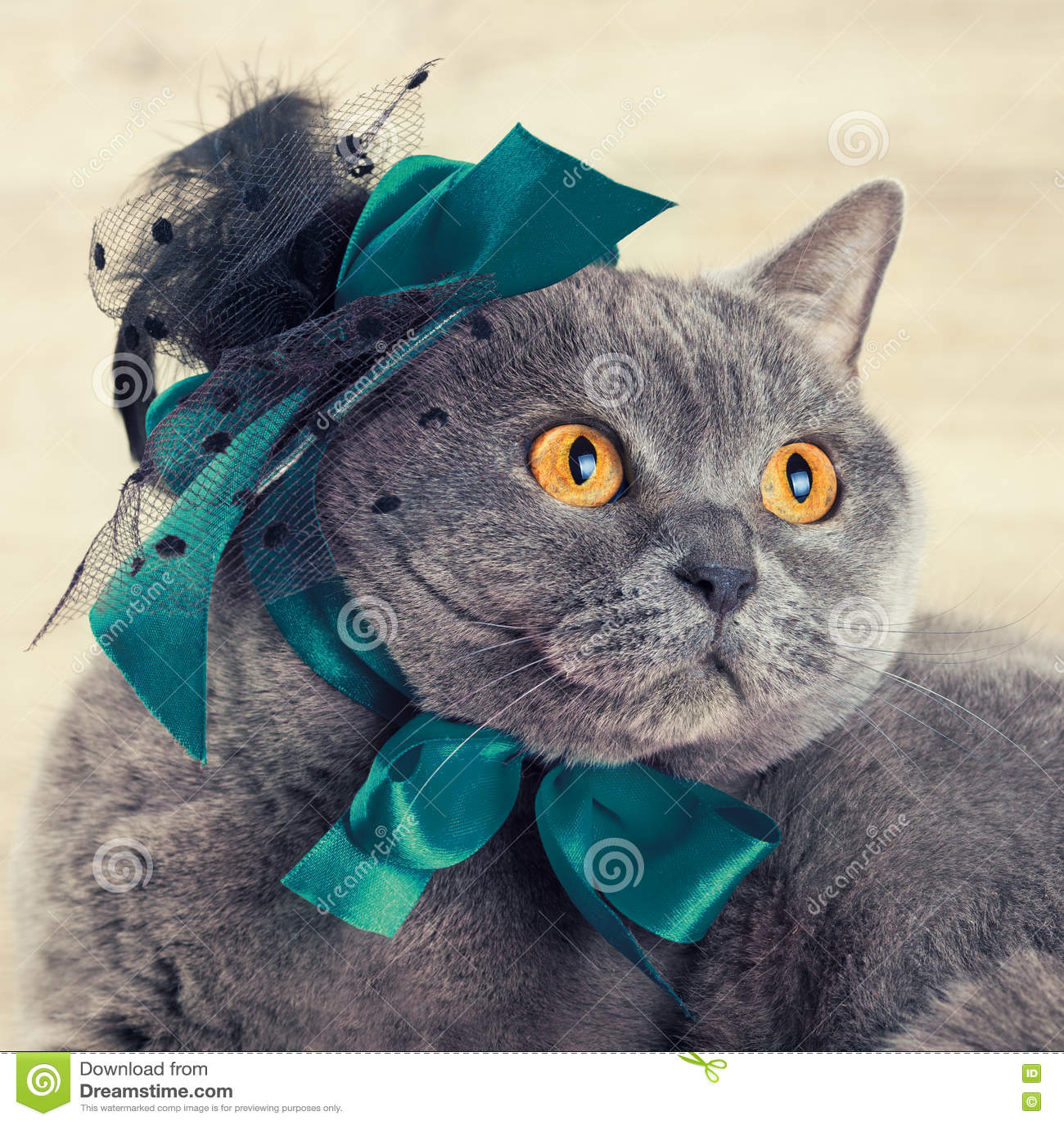 Шляпа кота