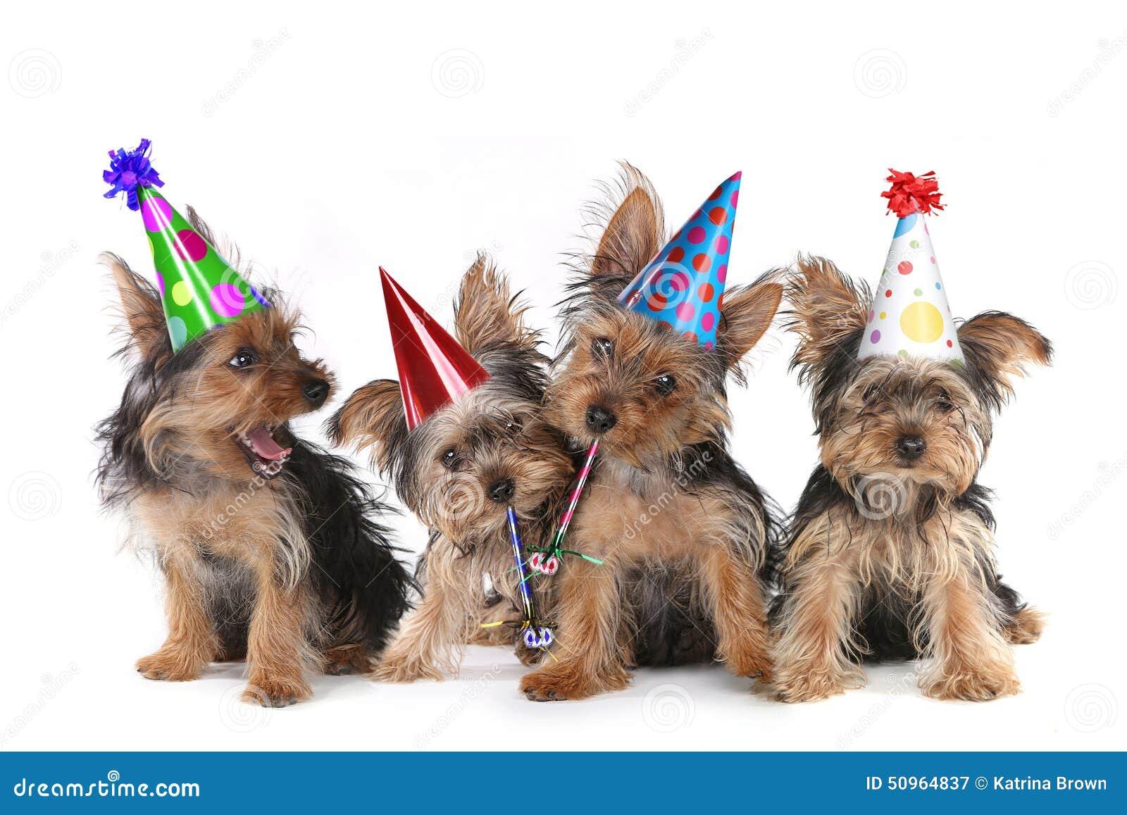 Поздравление с днем рождения с собачками