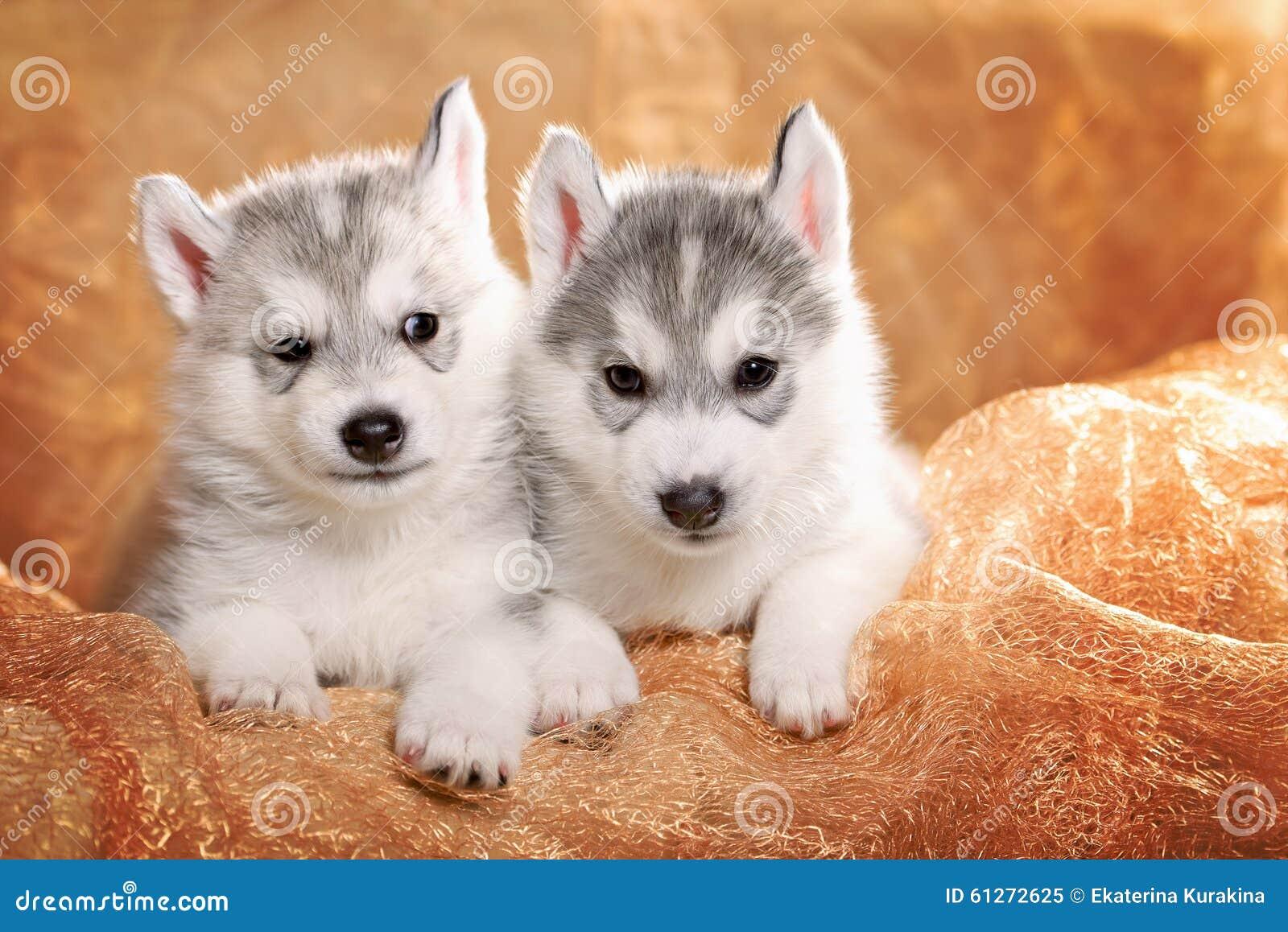 смотреть картинки про щенят